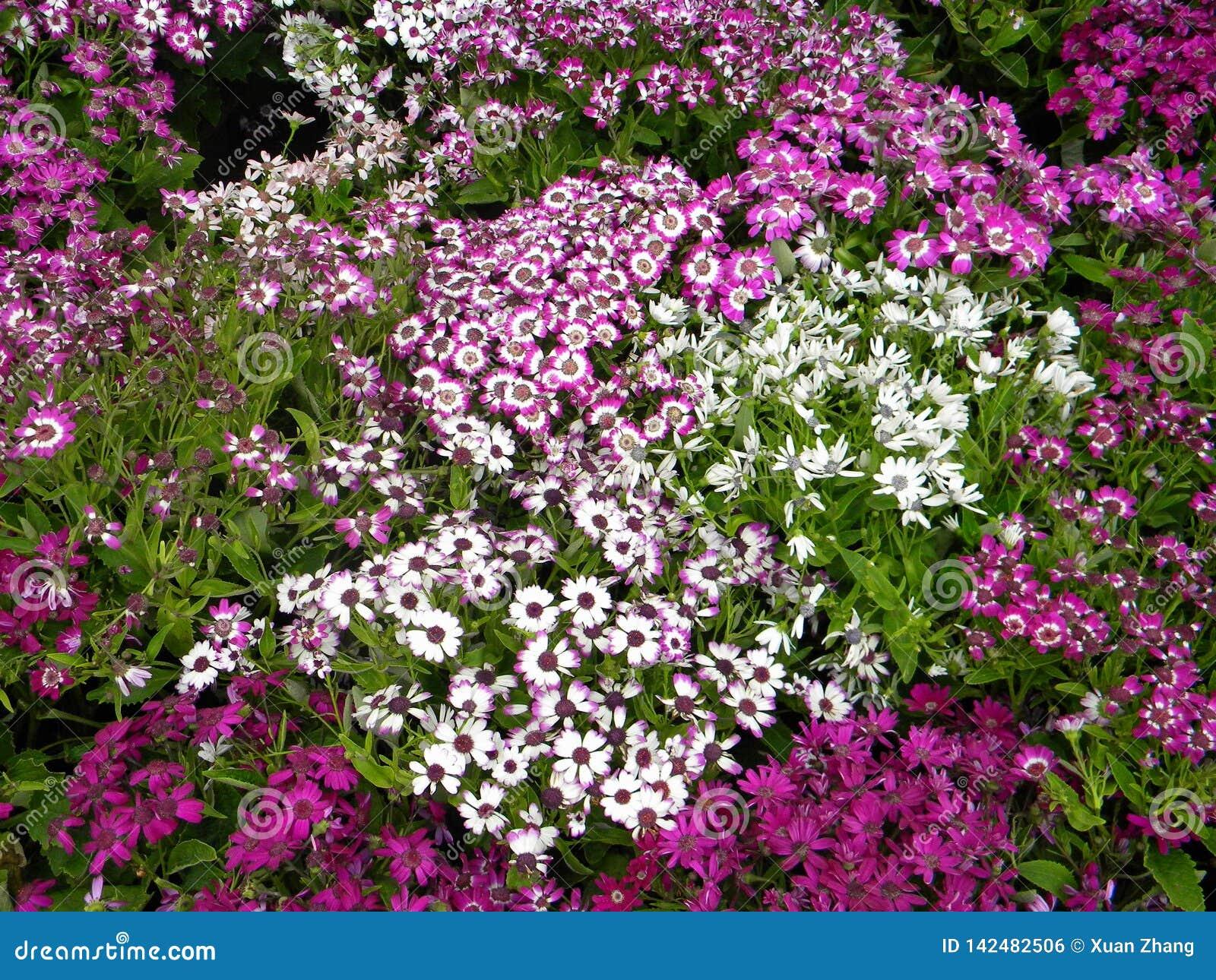 Een grote groep purper-stijlbloemen