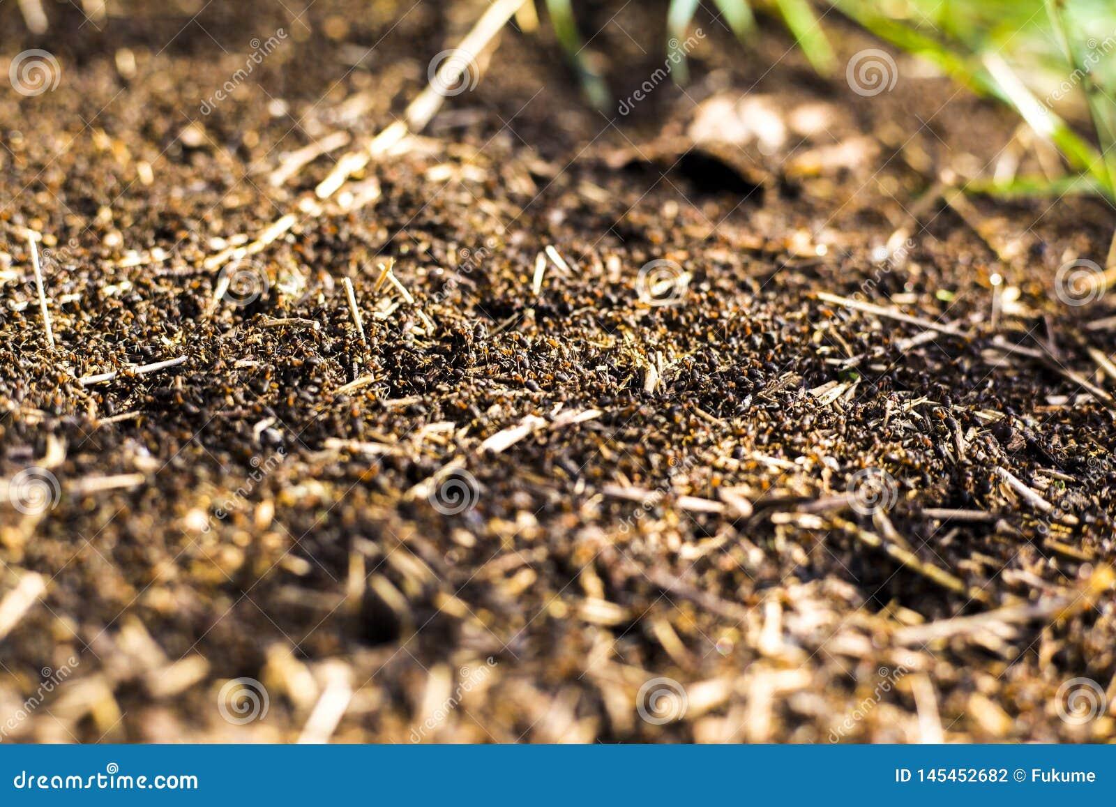 Een grote hoop van termieten, termieten eet rotte bomen