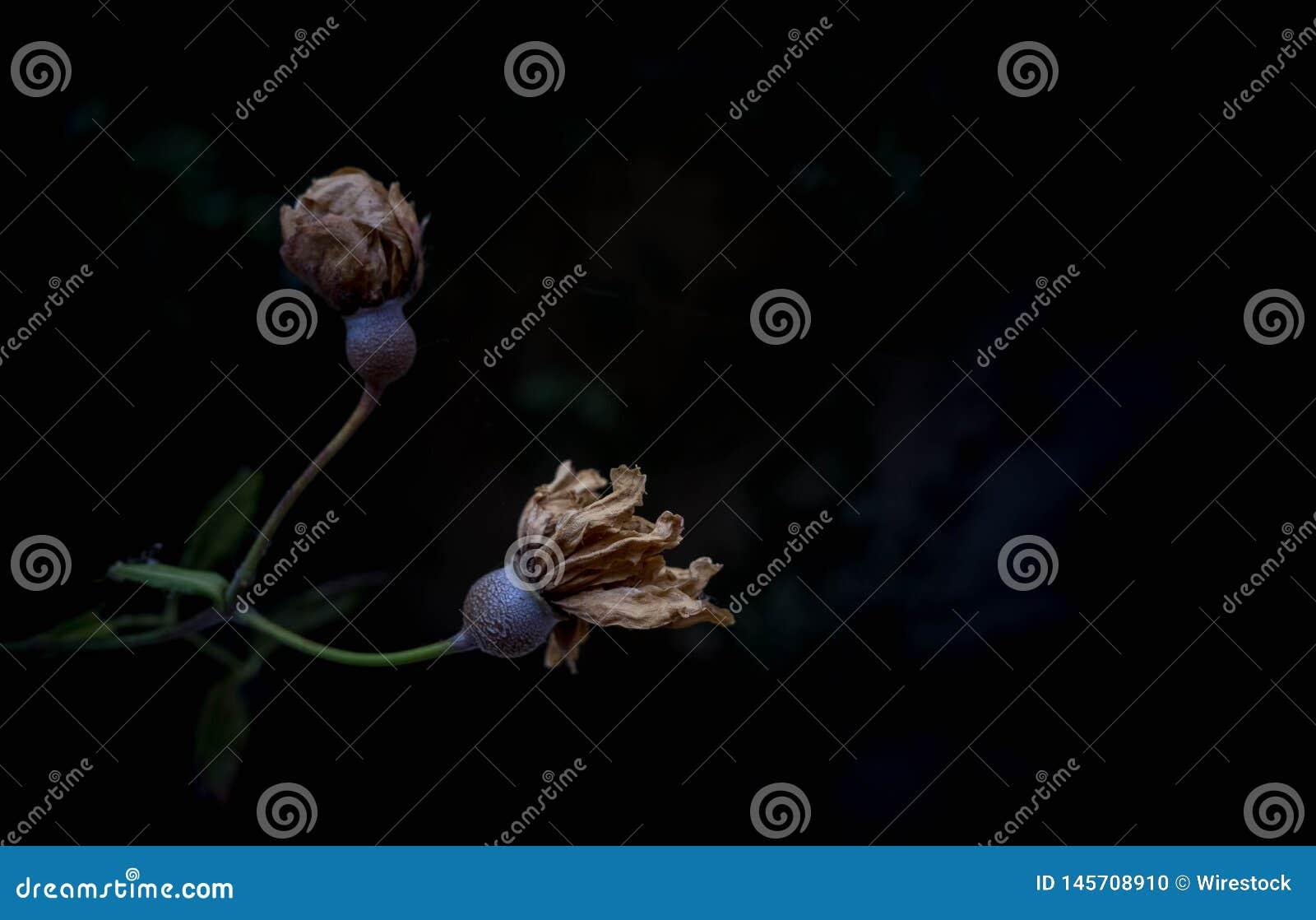 Een het indrukken sere bloemtak met donkere achtergrond