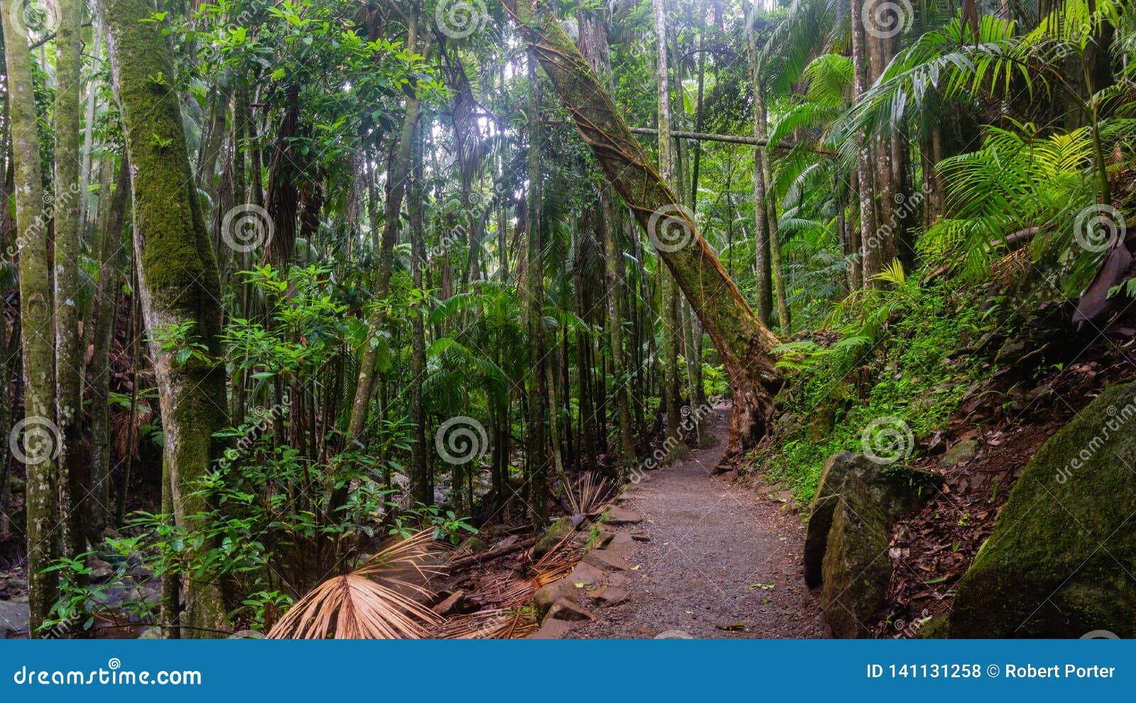 Een het lopen spoor in een Subtropisch Regenwoud - Australië
