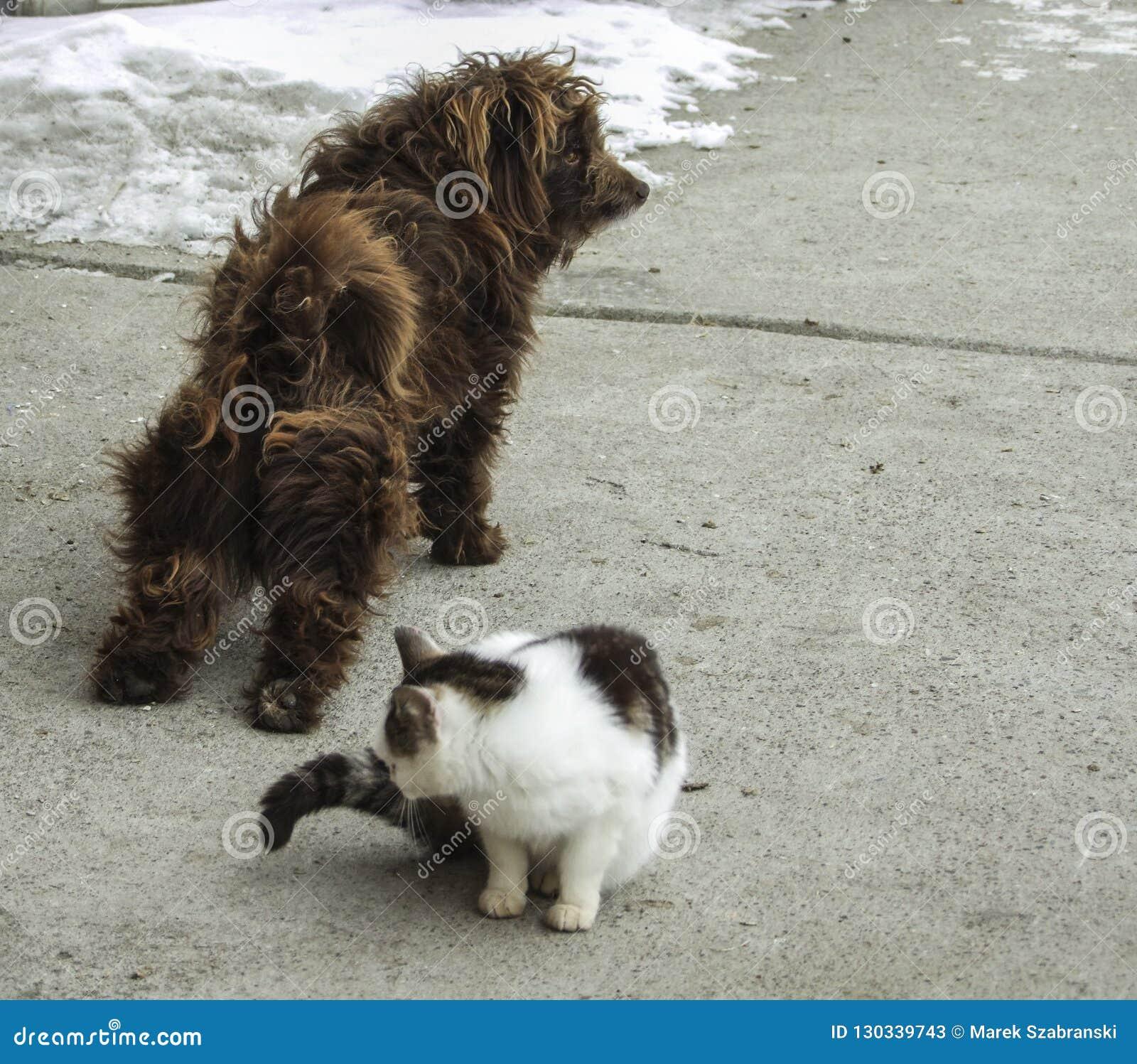 Een het slepen hond en een kattenzitting naast hem