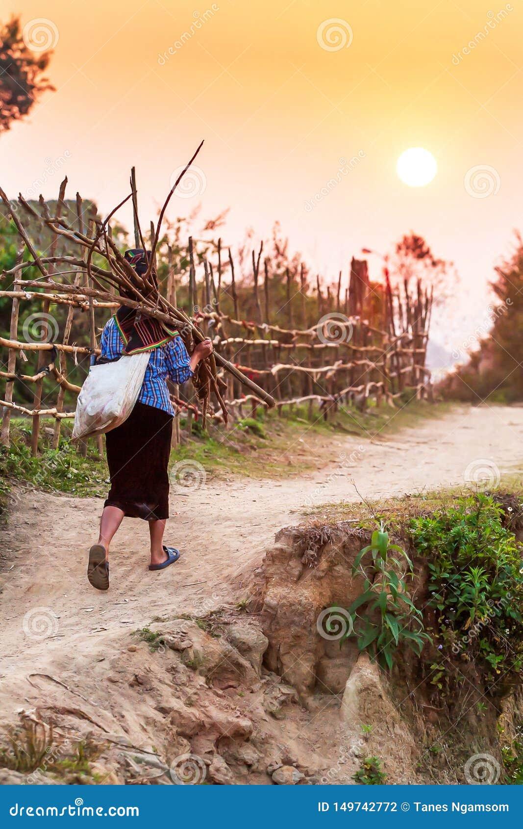 Een hogere Vietnamese vrouw die een bundel van brandhout dragen terwijl het lopen op een weg van het land bij schemer