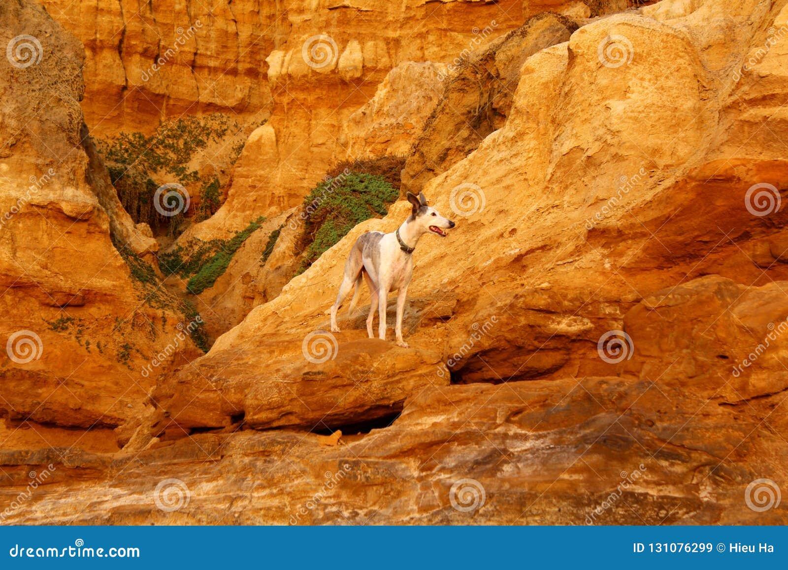 Een Hond onder Bizarre Geologische formaties Toe te schrijven aan Corrosie in Rode Bluff in Black Rock, Melbourne, Victoria, Aust