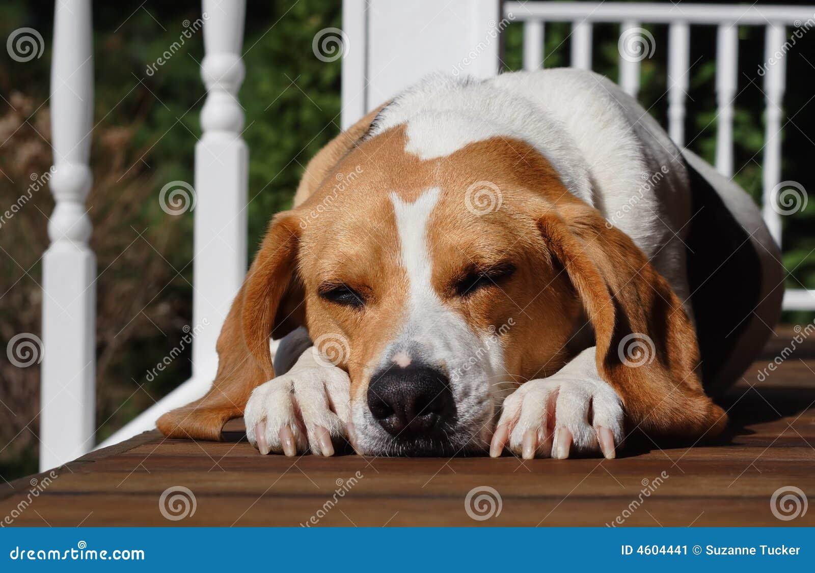 Een hondeleven