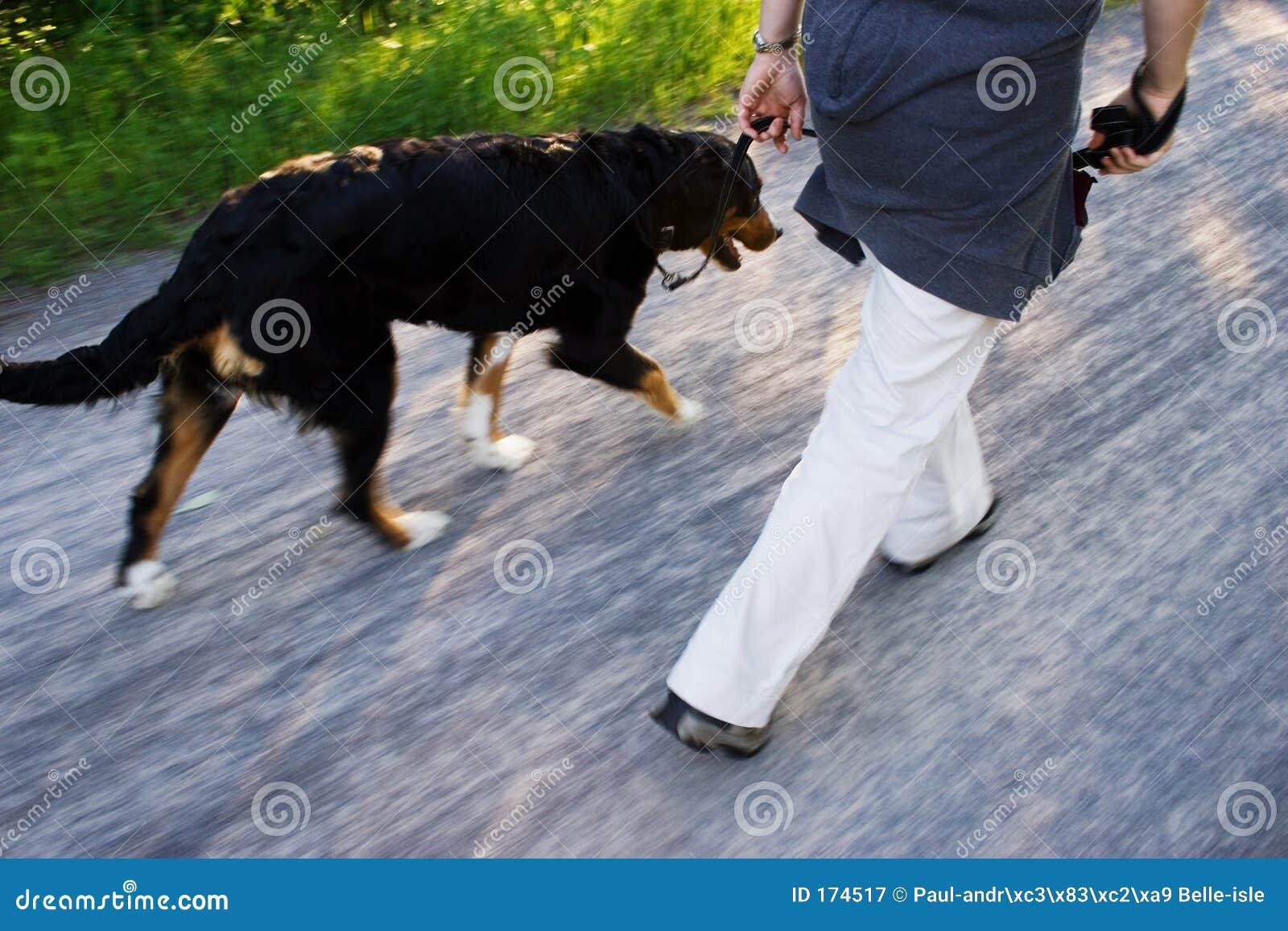 Een hondgang