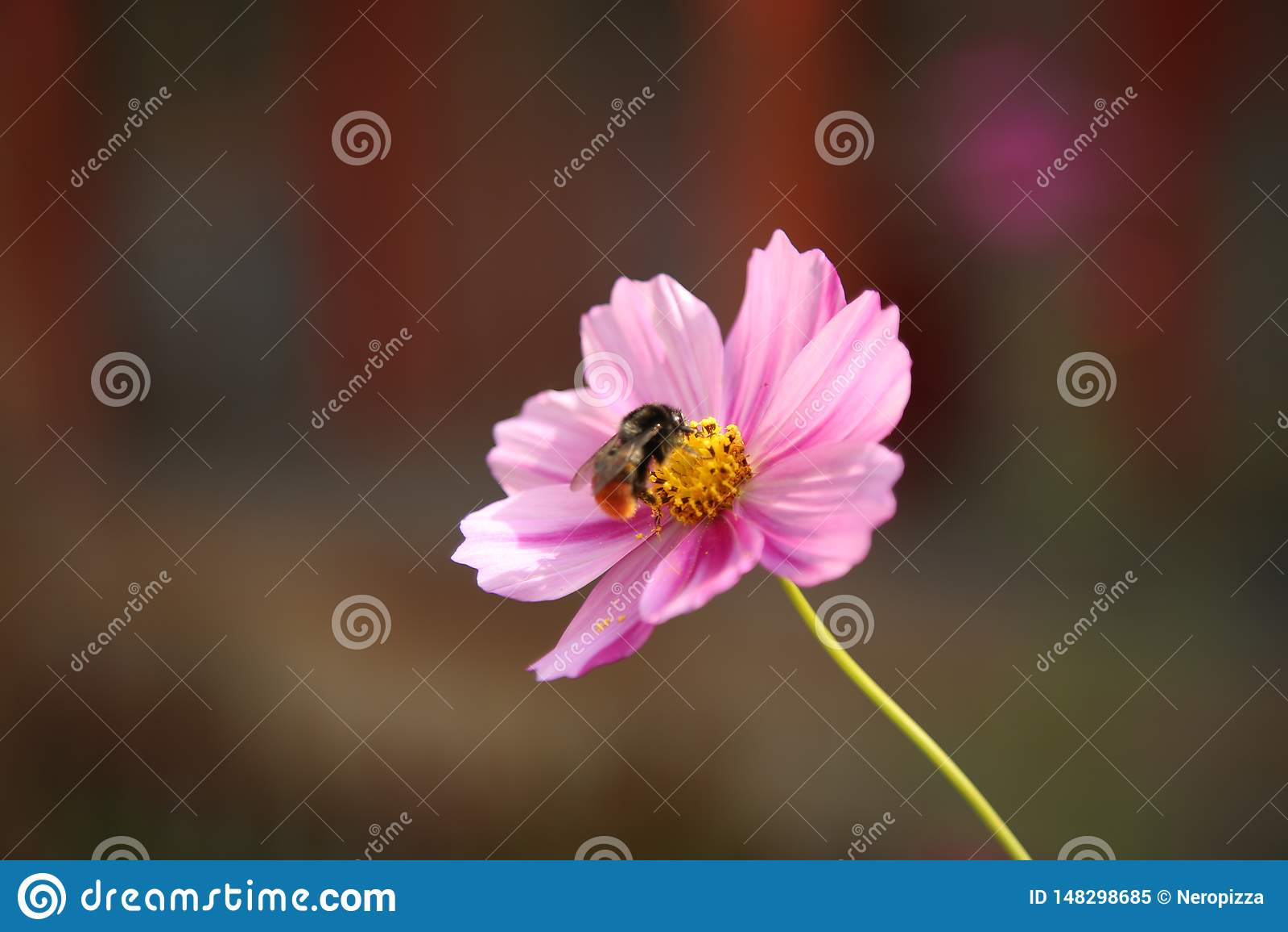 Een honingbij en zijn bloem