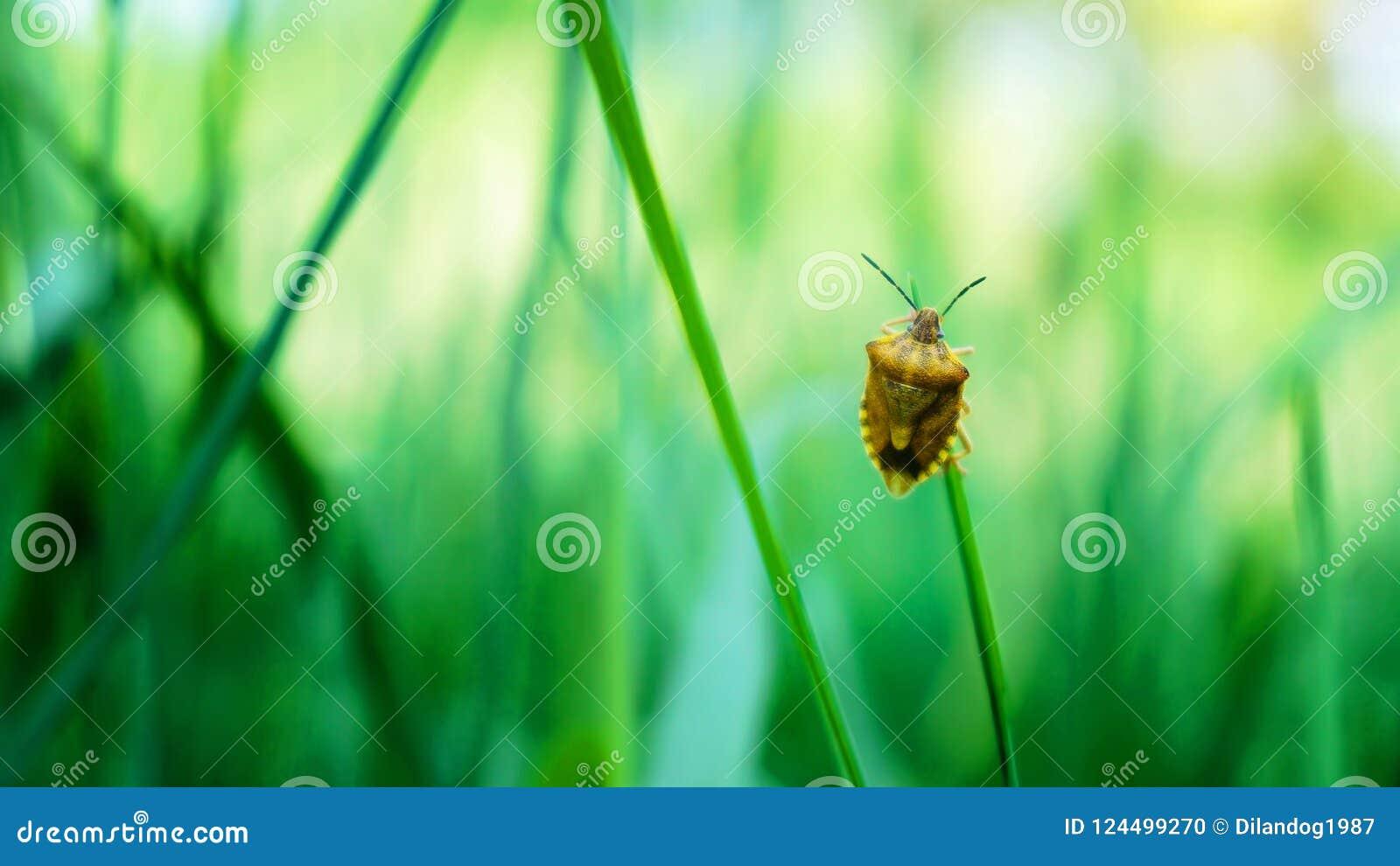 Een insect die zich op het blad bevinden