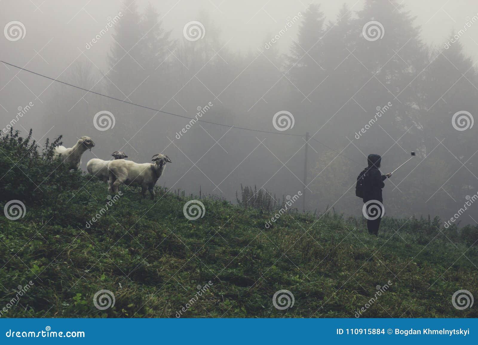 Een jong meisje met een foto van de selfiestok met de schapen in de mist