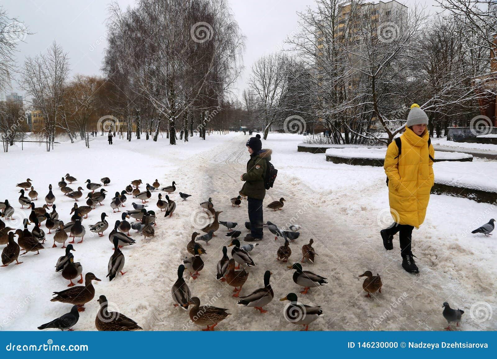 Een jongen voedt wilde eenden in de sneeuw dichtbij een bevroren kanaal in microdistrict Vostok