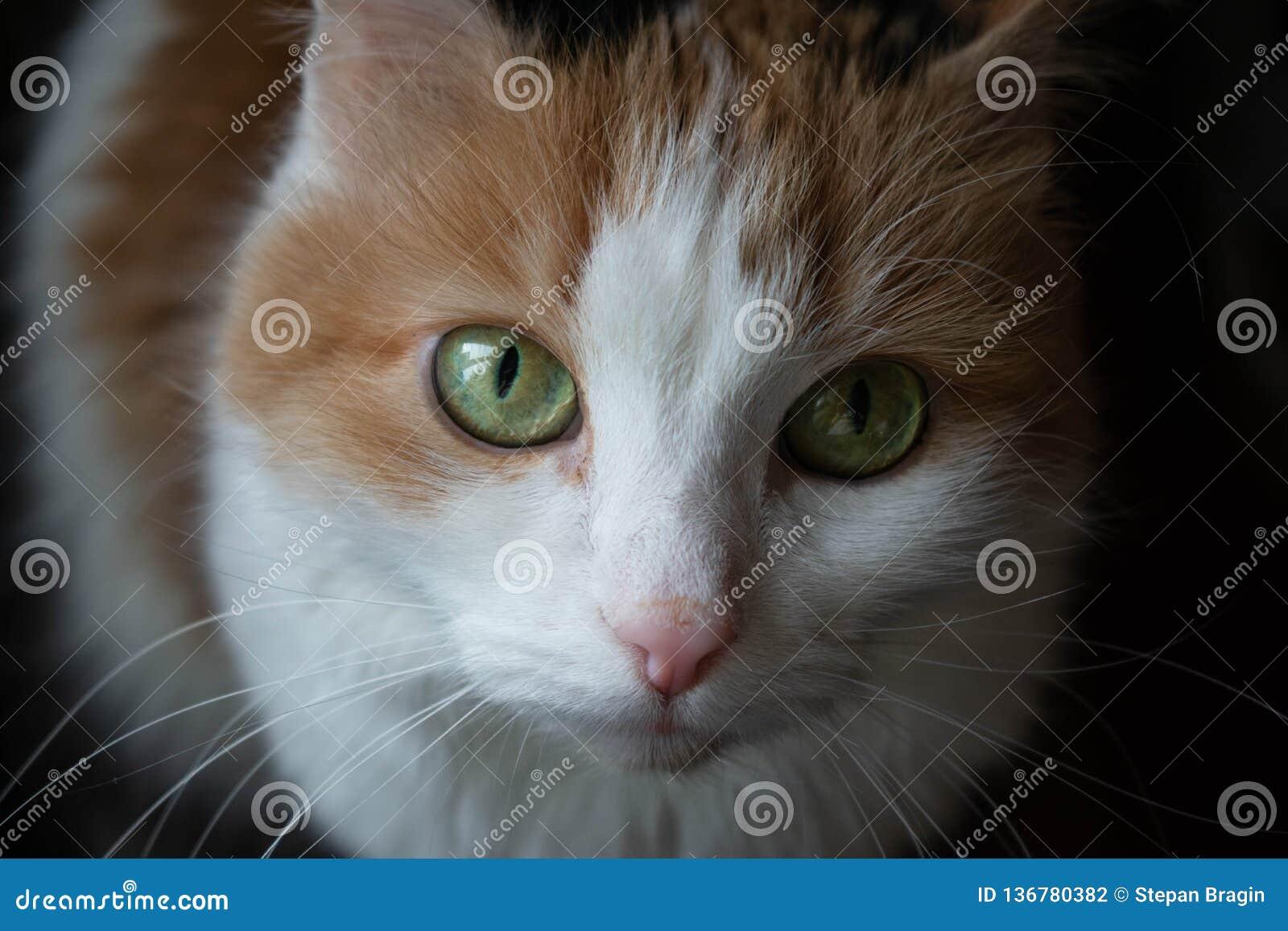Een kat met groene ogen