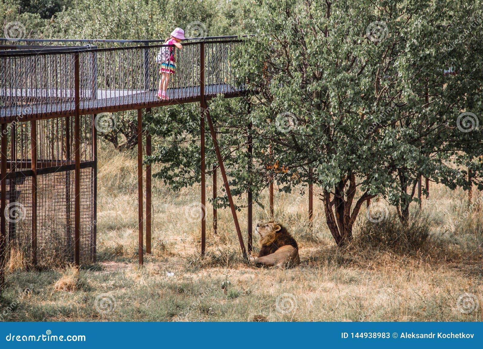 Een kind die met een leeuw spelen
