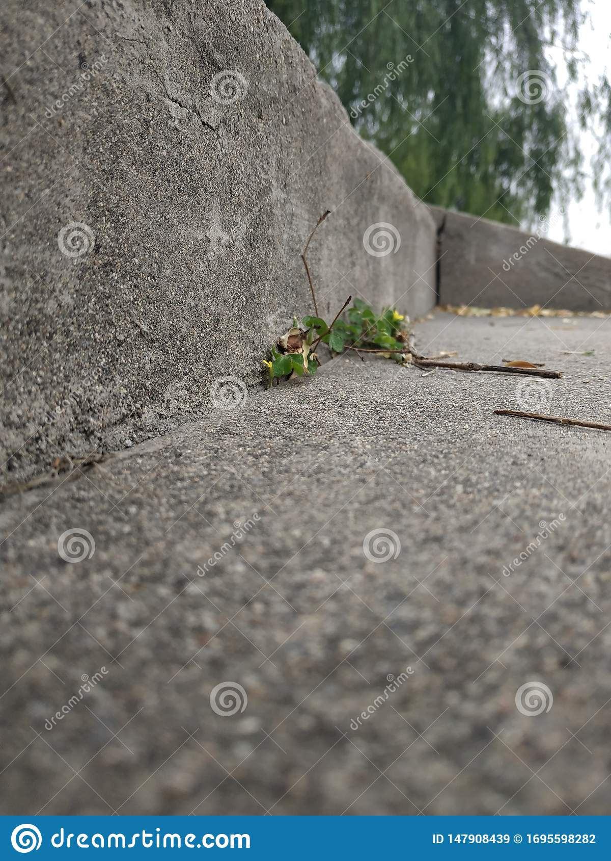 Een klein gras groeit in de oude steenstappen