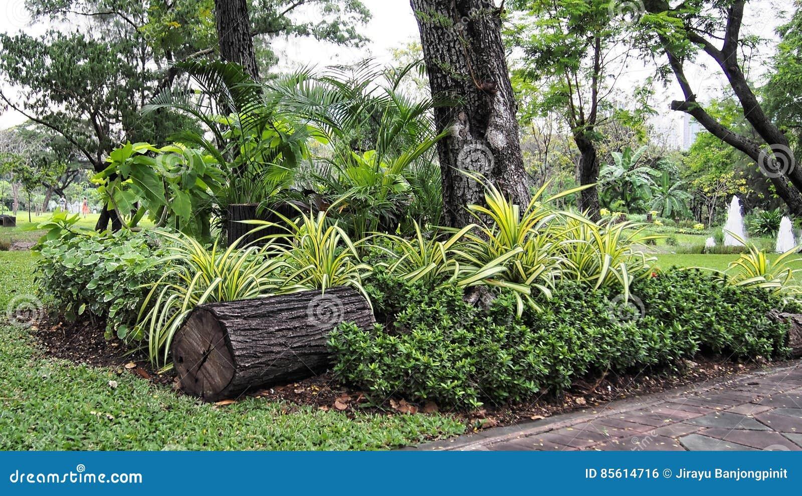 Park Als Tuin : Een klein park in tuin stock foto. afbeelding bestaande uit boom