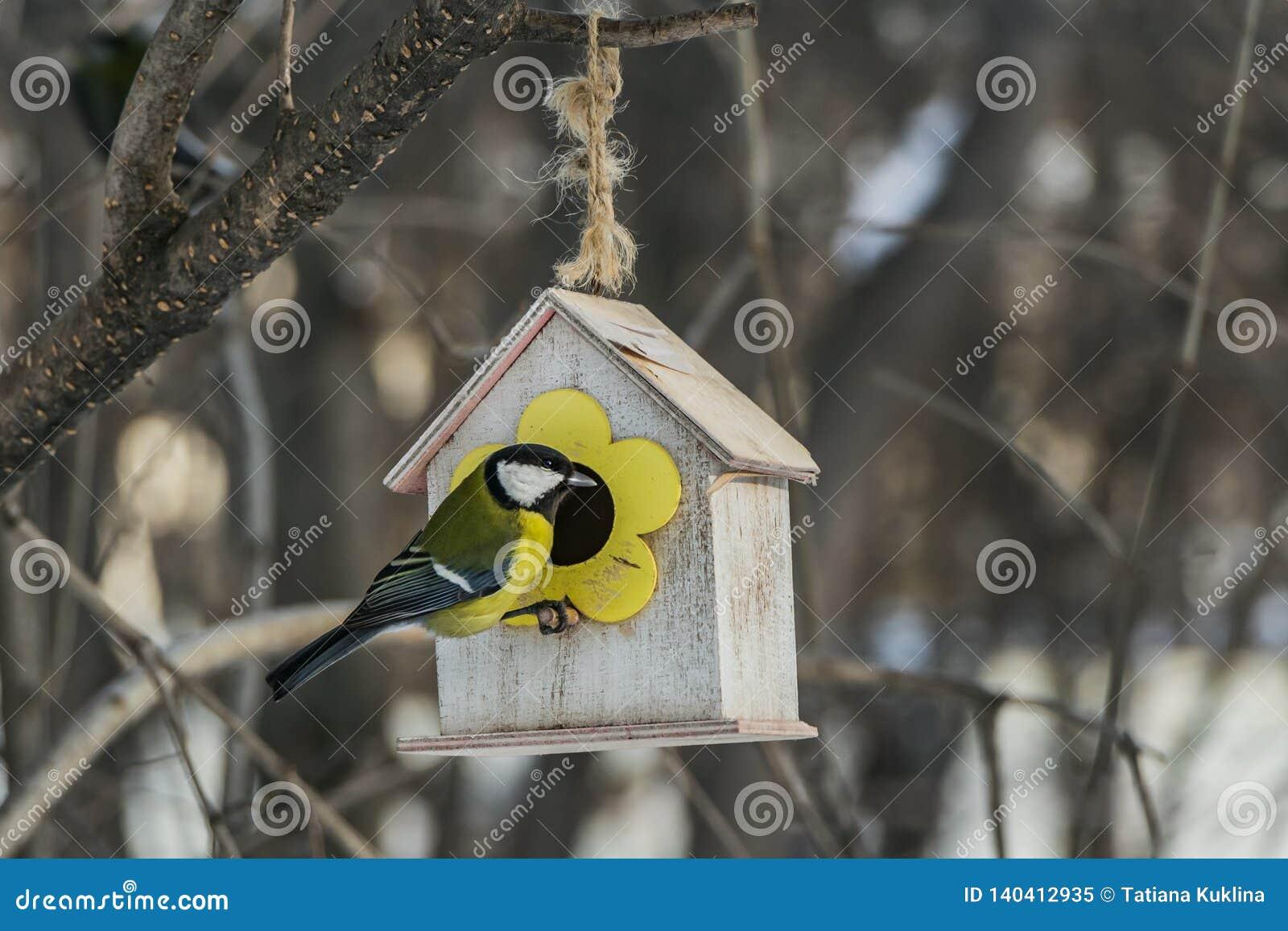 Een kleine gele mees zit op een geel vogel en eekhoornvoederhuis van triplex in het park