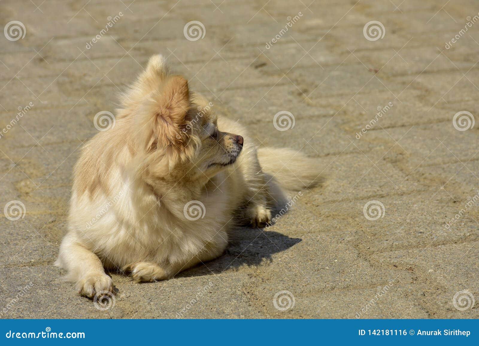 Een kleine hondzitting die op hoop wachten