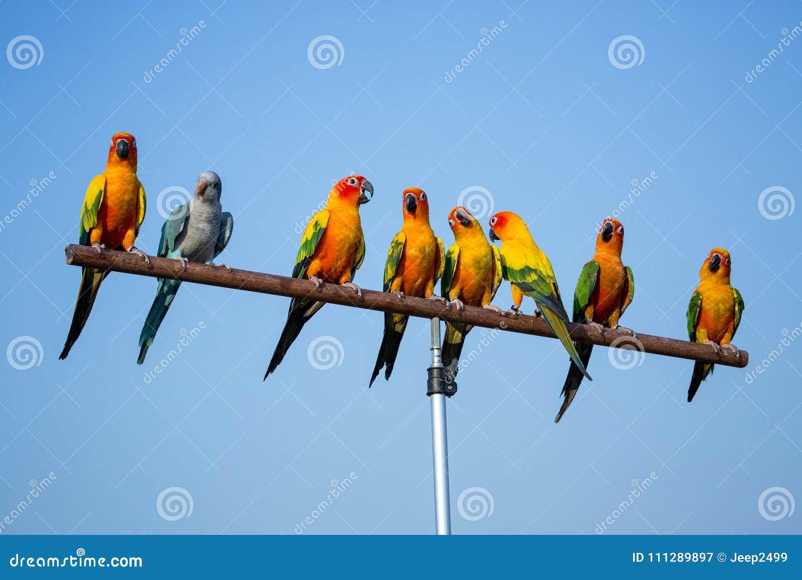 Een kleine multi-colored papegaai op een tak