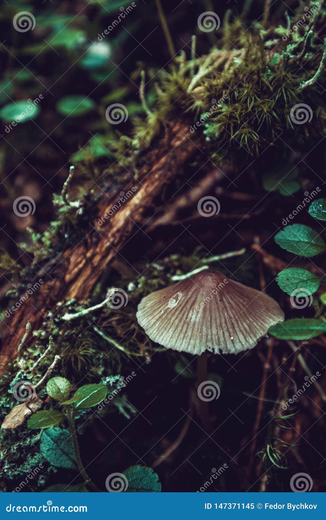 Een kleine paddestoel in het bos