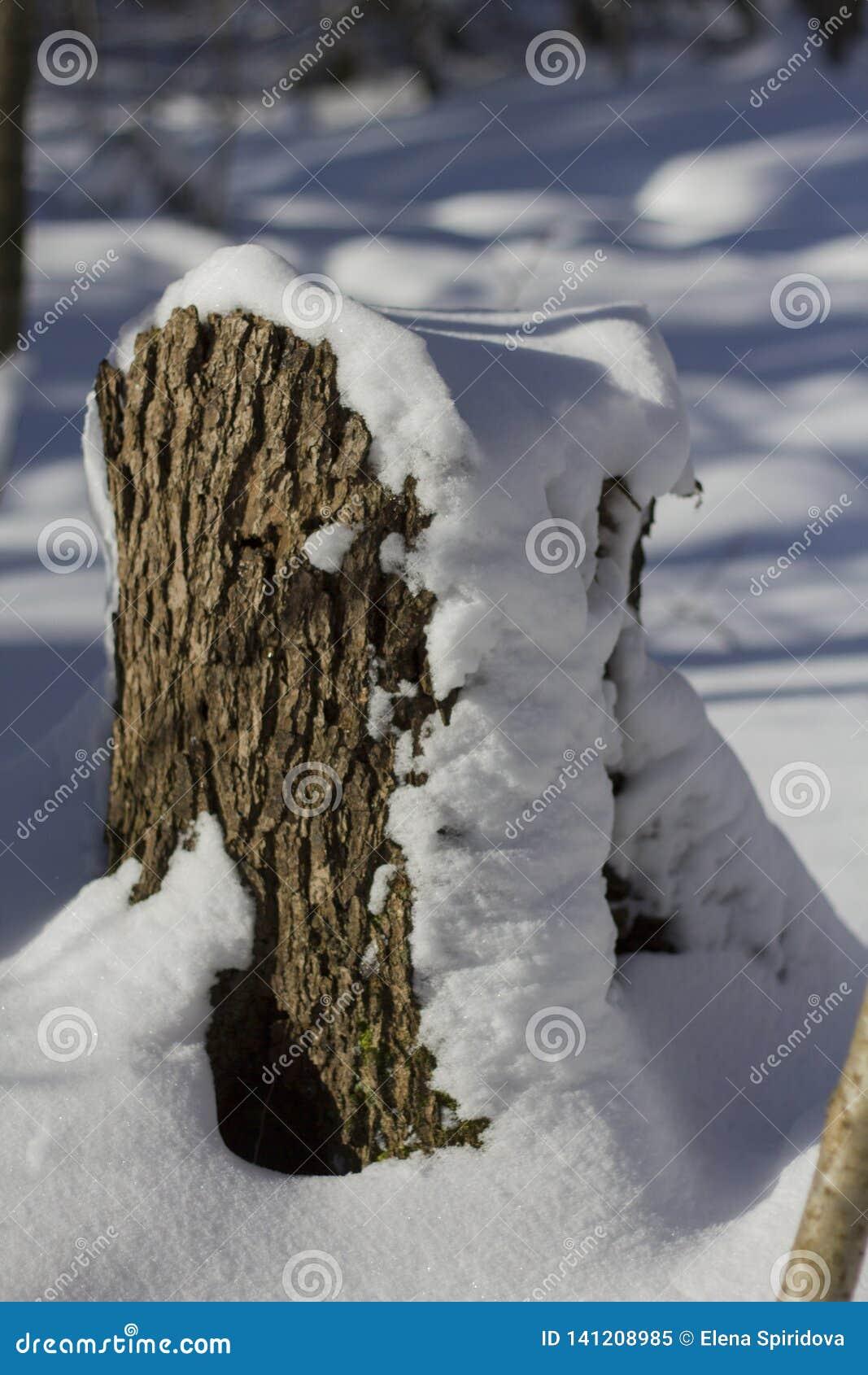 Een kleine stomp met een sneeuw GLB in het bos