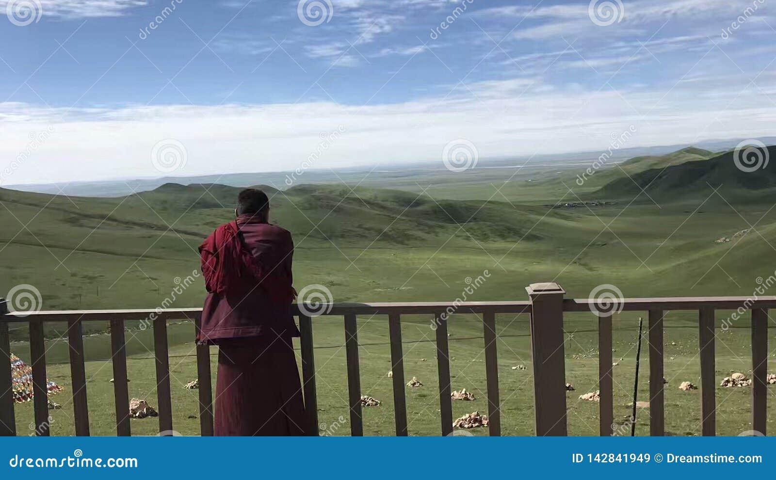 Een lama bidt bij de eindeloze prairie