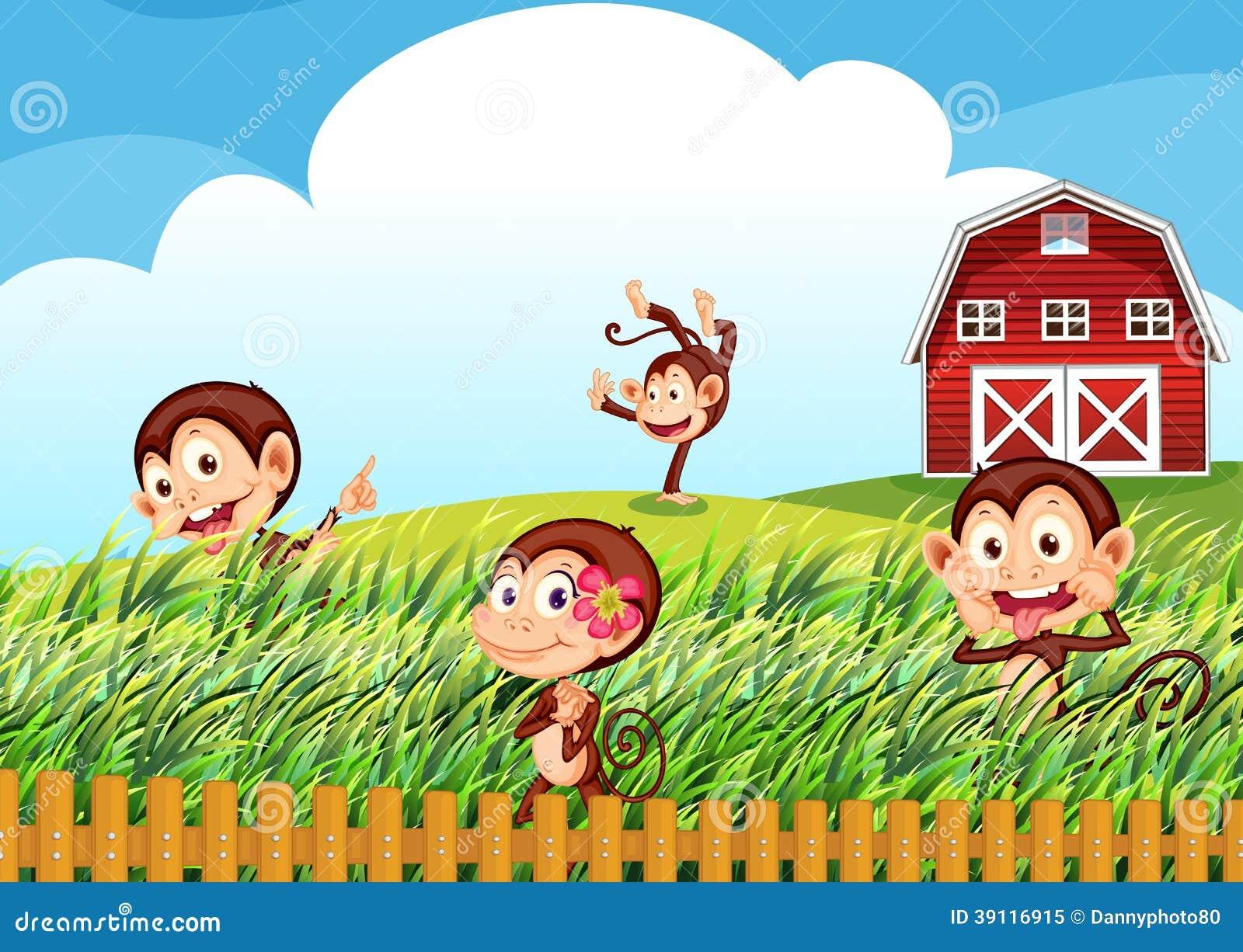 Een landbouwbedrijf met apen