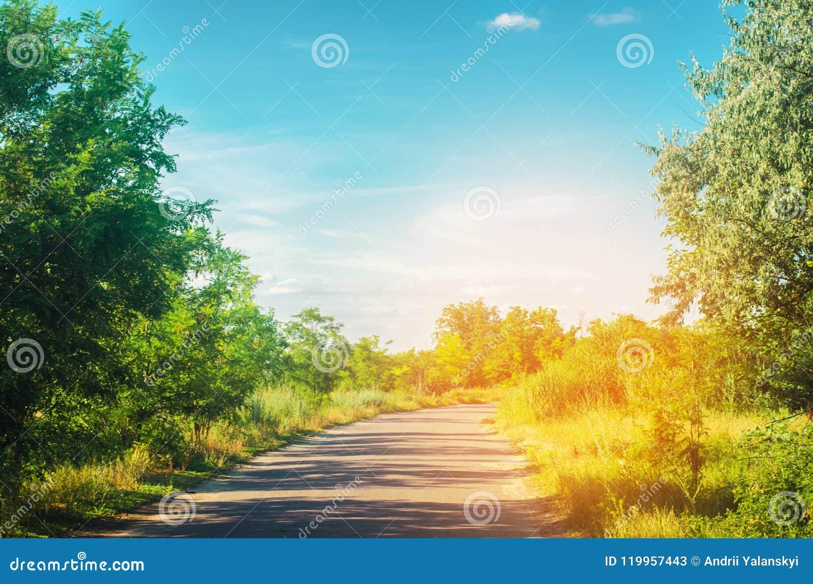 Een landweg met groene bomen en de blauwe hemel dichtbij het bos op een heldere de zomerdag Platteland nave Mooi landschap