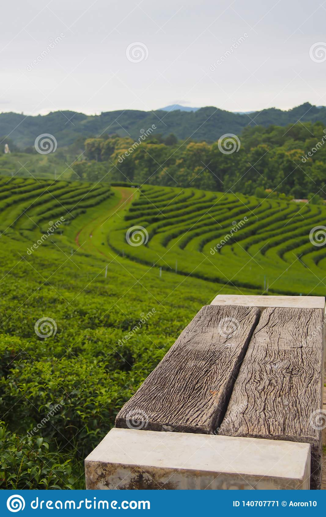 Een lege houten stoel die in een groene theeaanplanting is wordt geplaatst een rij dichtbij de berg