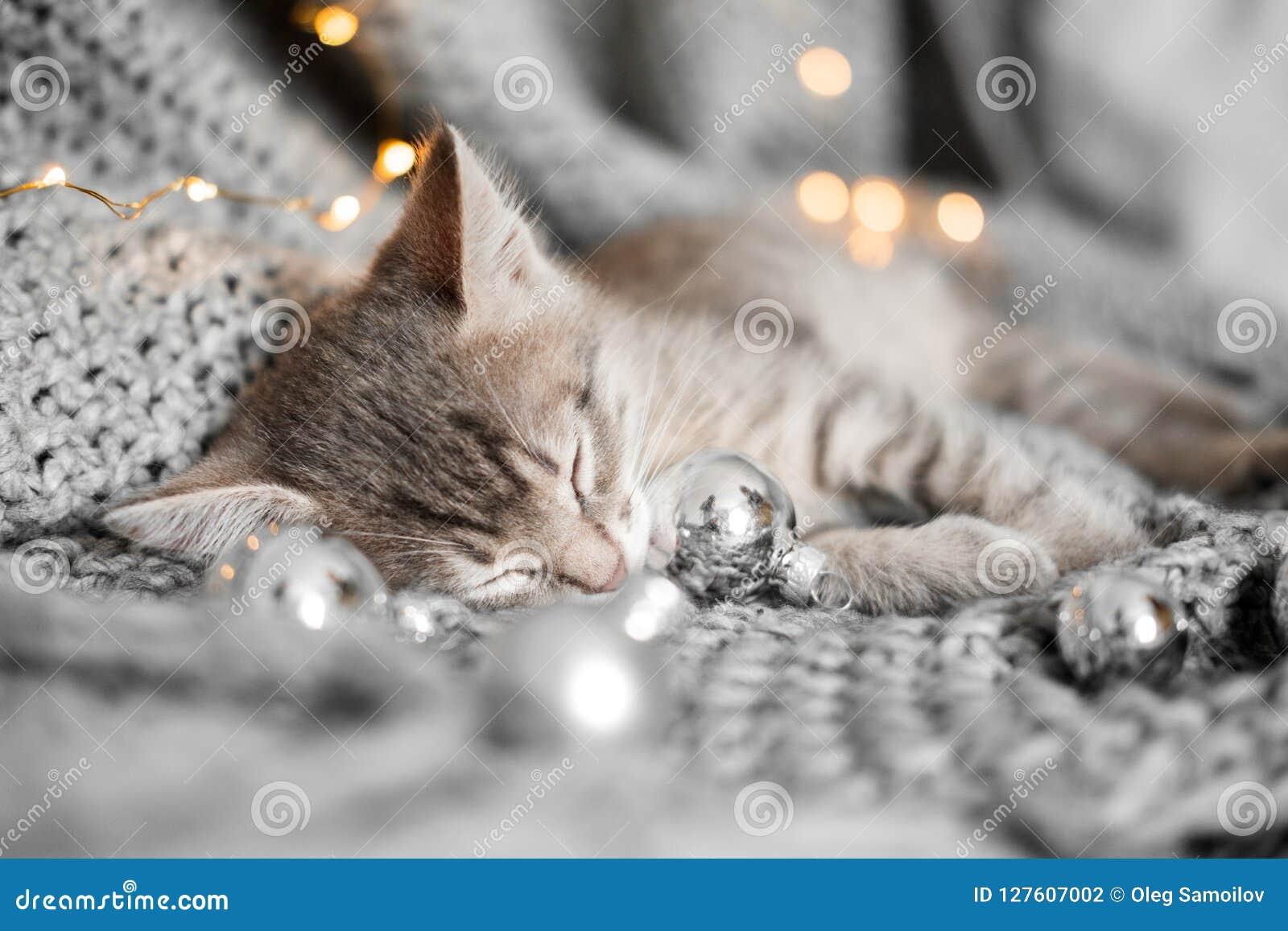 Een leuk katje rust op een grijze plaid in Kerstmisballen