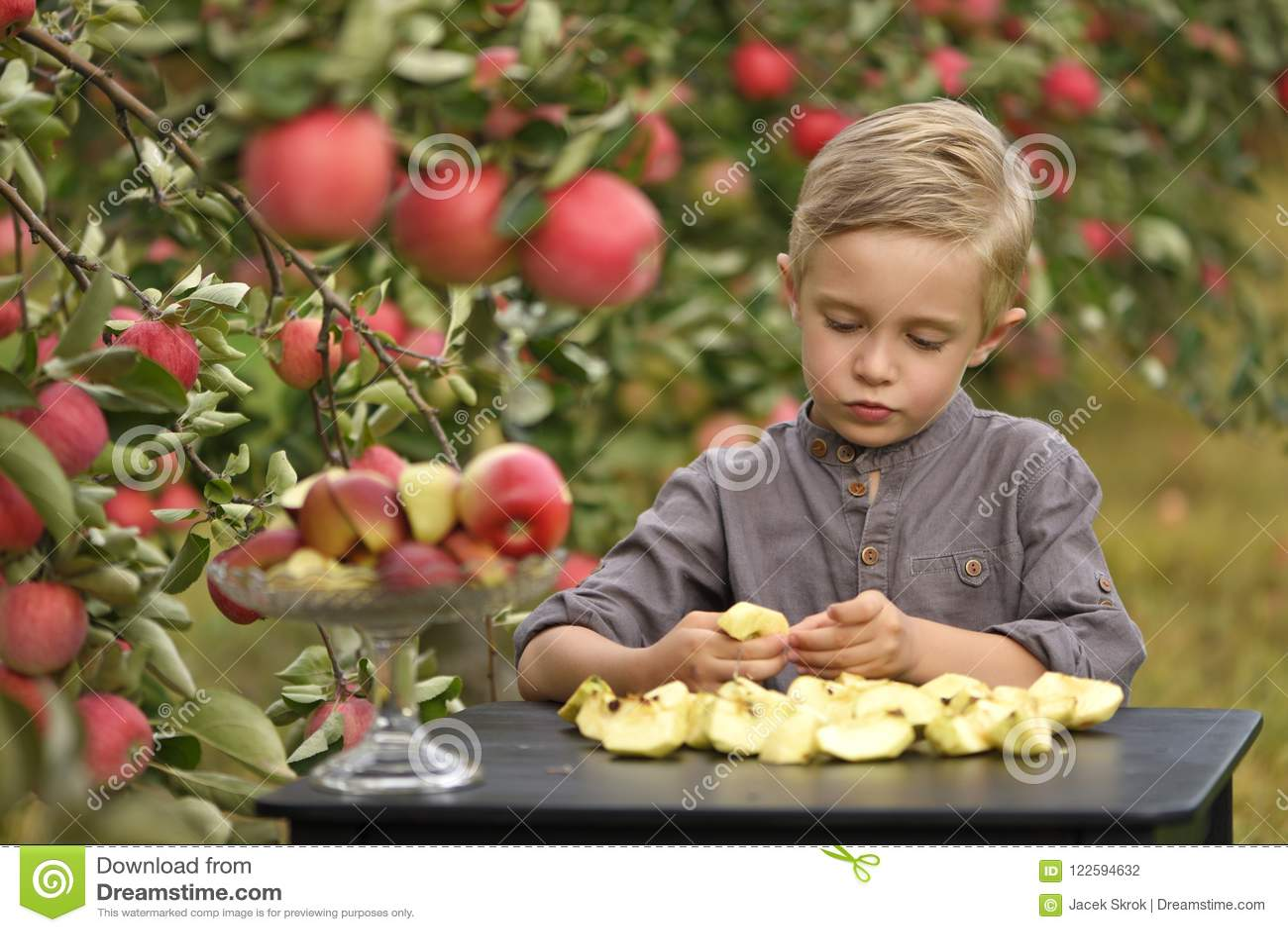 Een leuke, glimlachende jongen plukt appelen in een appelboomgaard en houdt een appel