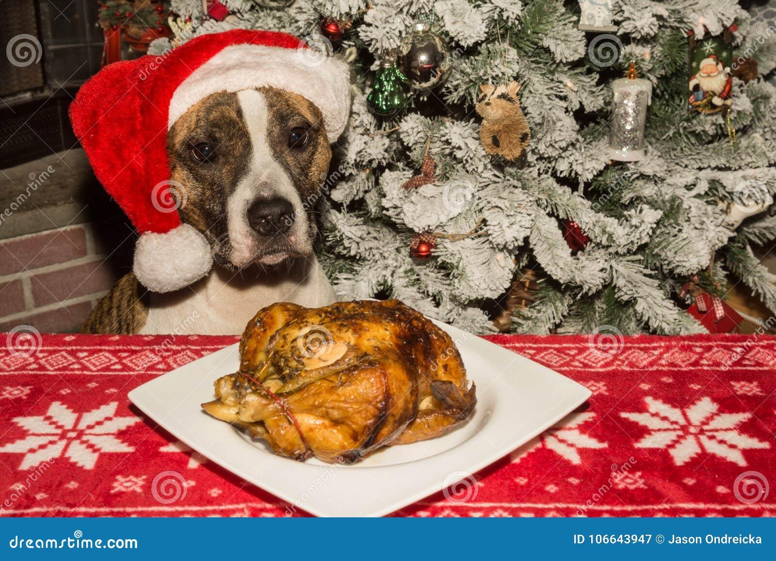 Een leuke hond die voor het vakantiediner bedelen