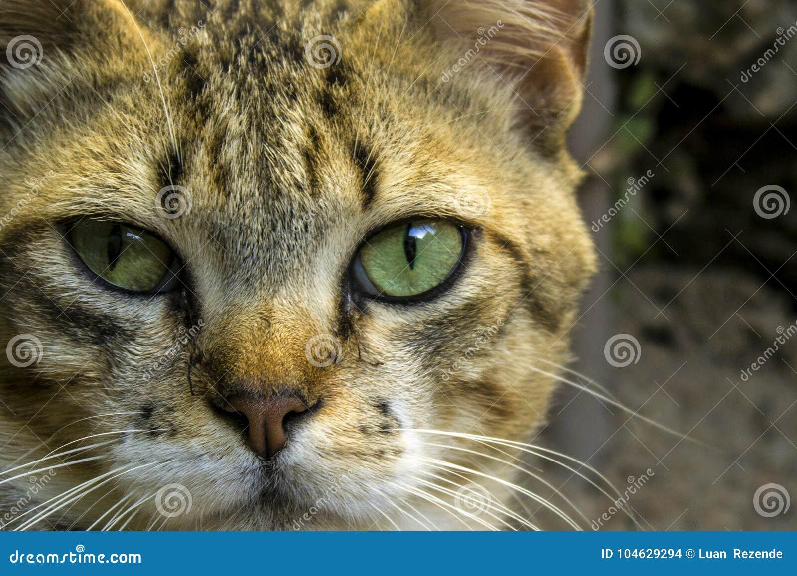 Download Een Leuke Kleine Kat, Liefdekat, Sluit Omhoog Stock Foto - Afbeelding bestaande uit lippen, eyed: 104629294