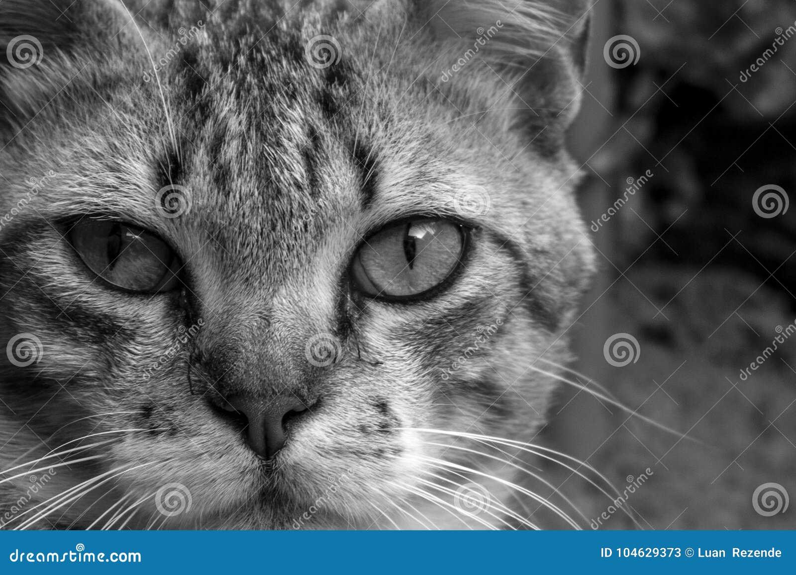 Download Een Leuke Kleine Kat, Liefdekat, Sluit Omhoog Stock Afbeelding - Afbeelding bestaande uit gelukkig, gezicht: 104629373