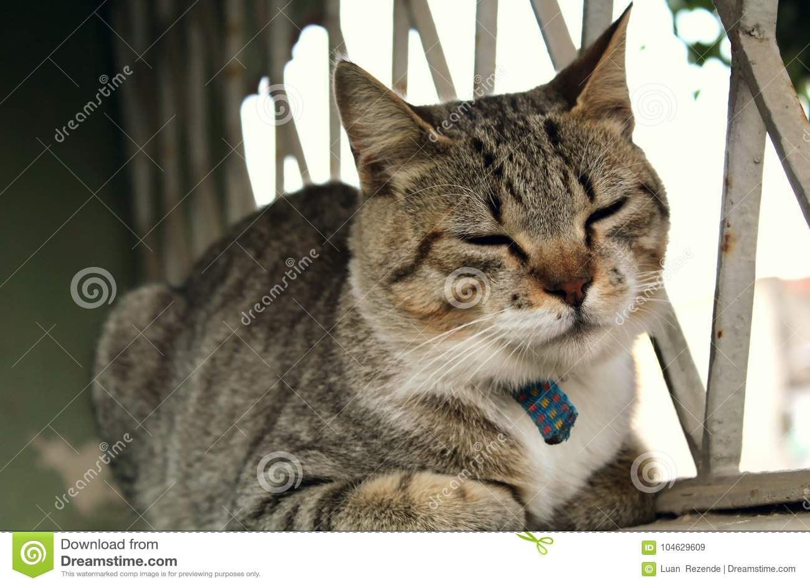 Download Een Leuke Kleine Kat, Liefdekat, Sluit Omhoog Stock Afbeelding - Afbeelding bestaande uit grappig, groen: 104629609