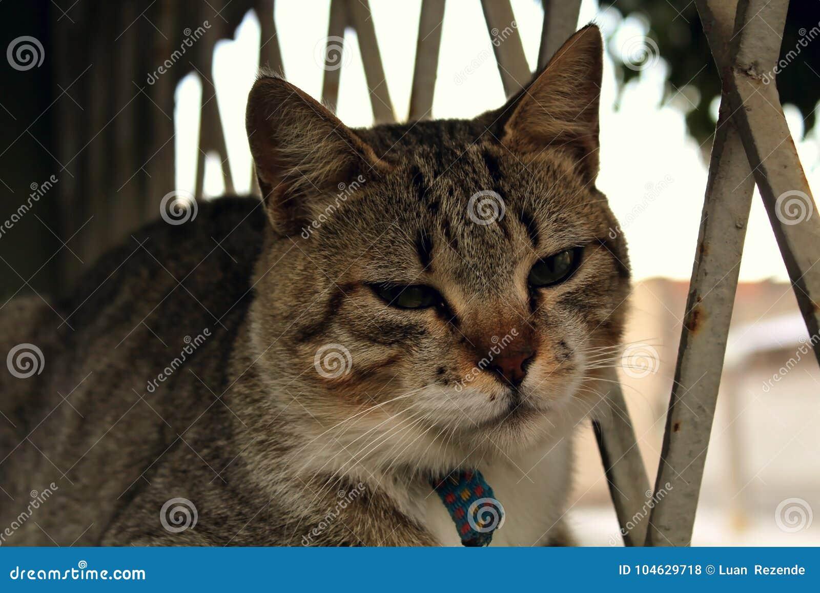 Download Een Leuke Kleine Kat, Liefdekat, Sluit Omhoog Stock Foto - Afbeelding bestaande uit voedsel, luim: 104629718