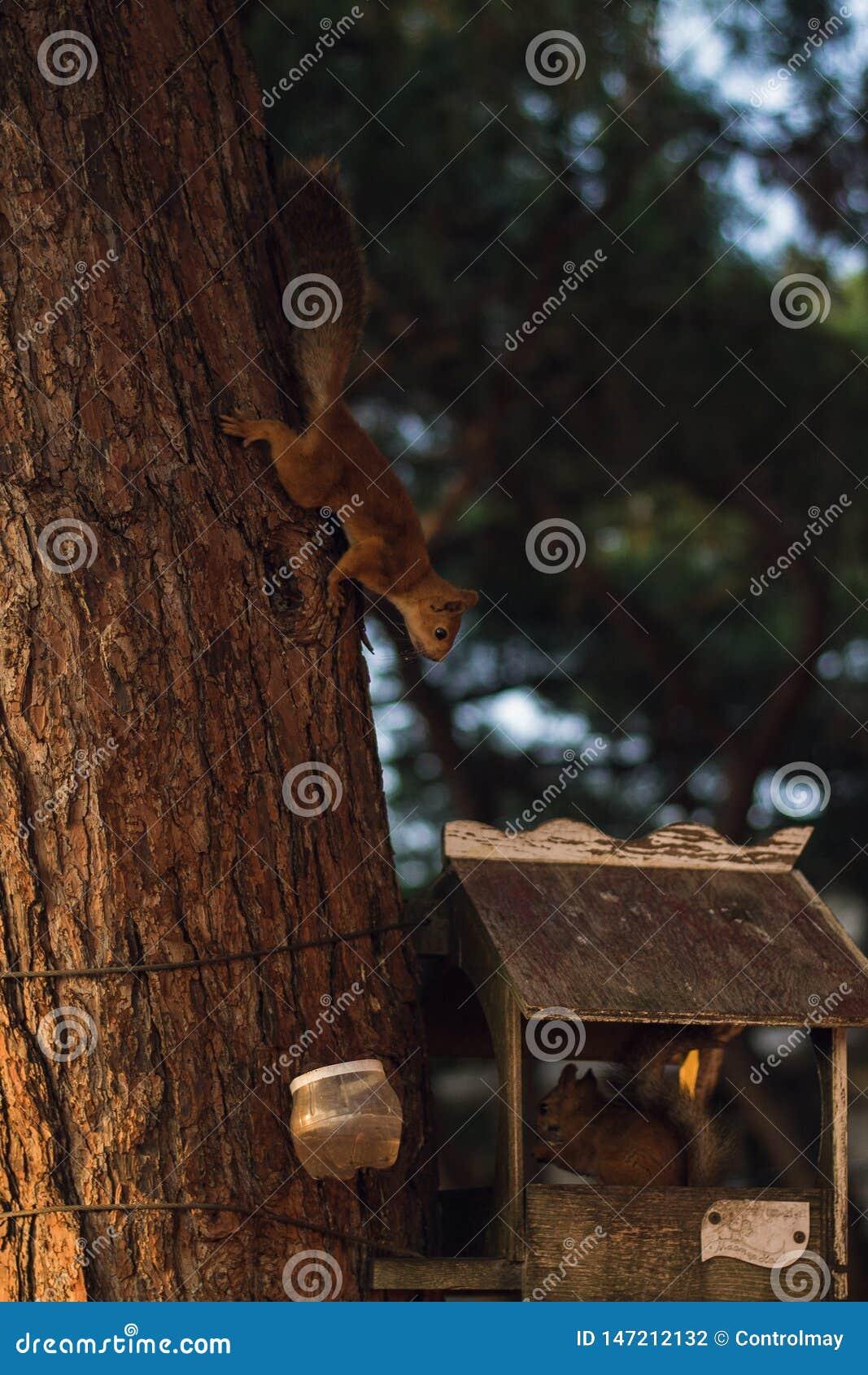 Een leuke, pluizige eekhoorn