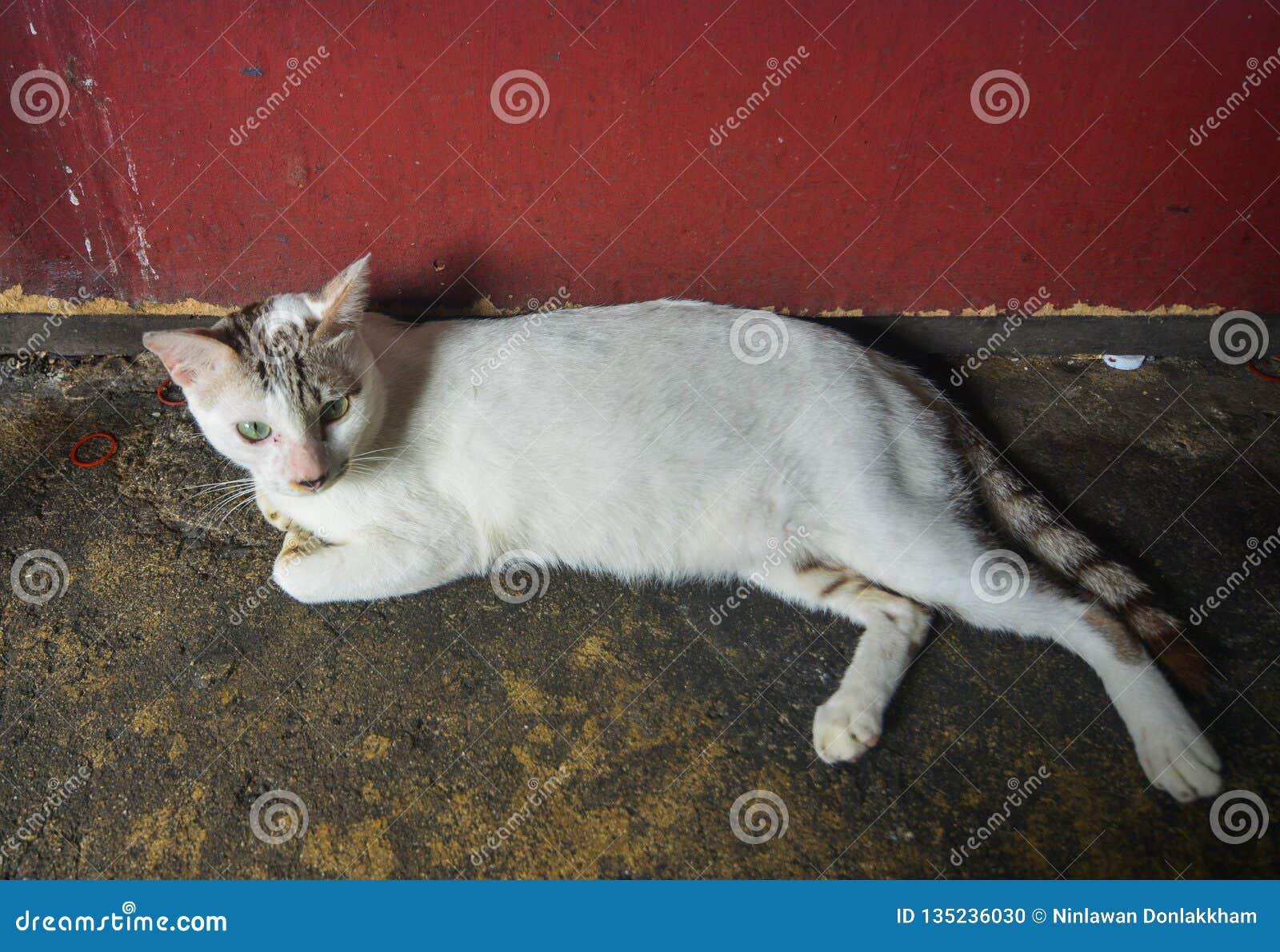 Een luie kat die op weg liggen