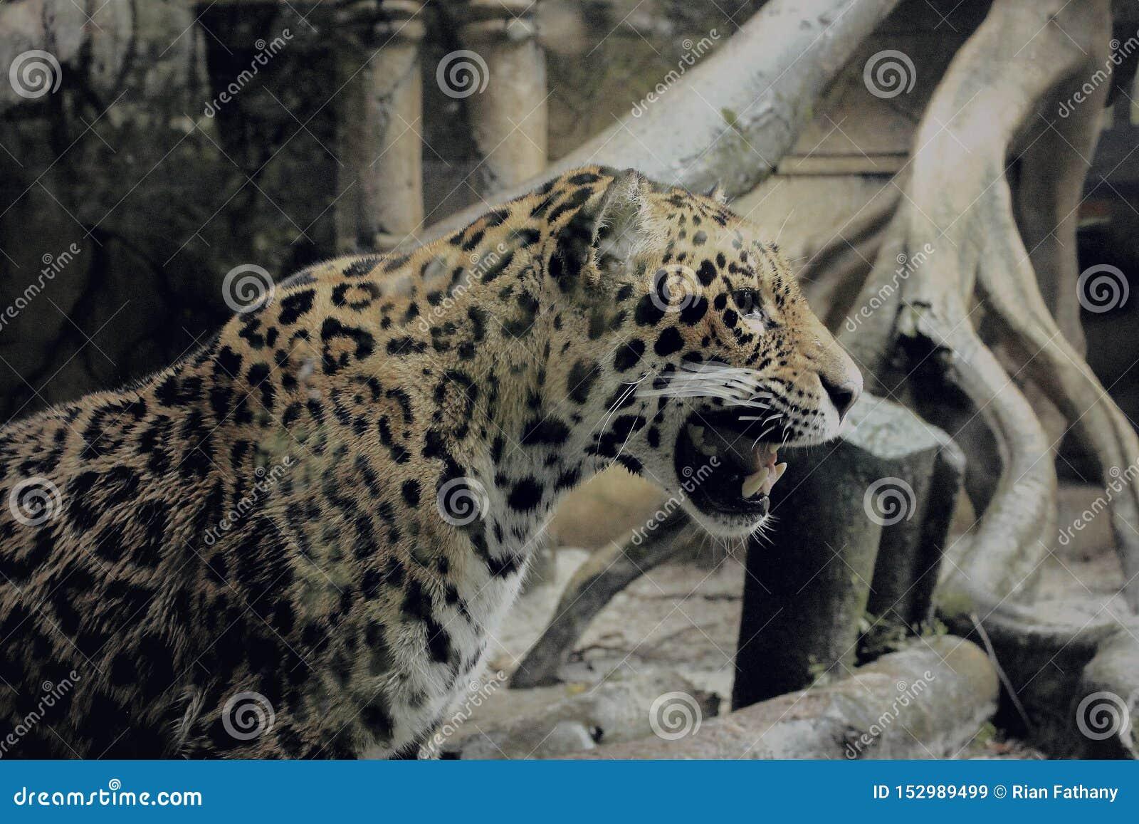 Een luipaard in safarituin