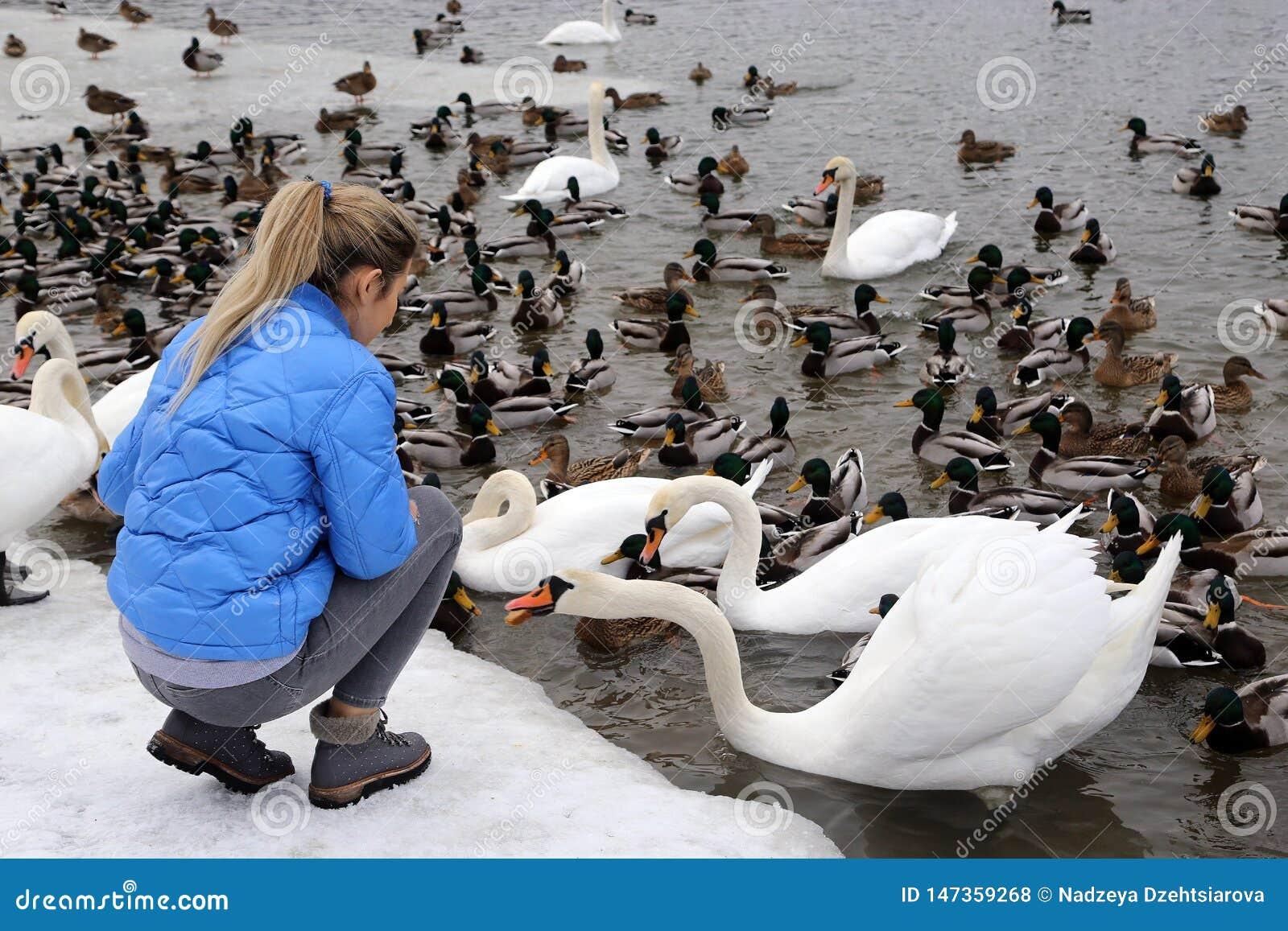Een meisje voedt watervogels op de kust van een meer in de winter