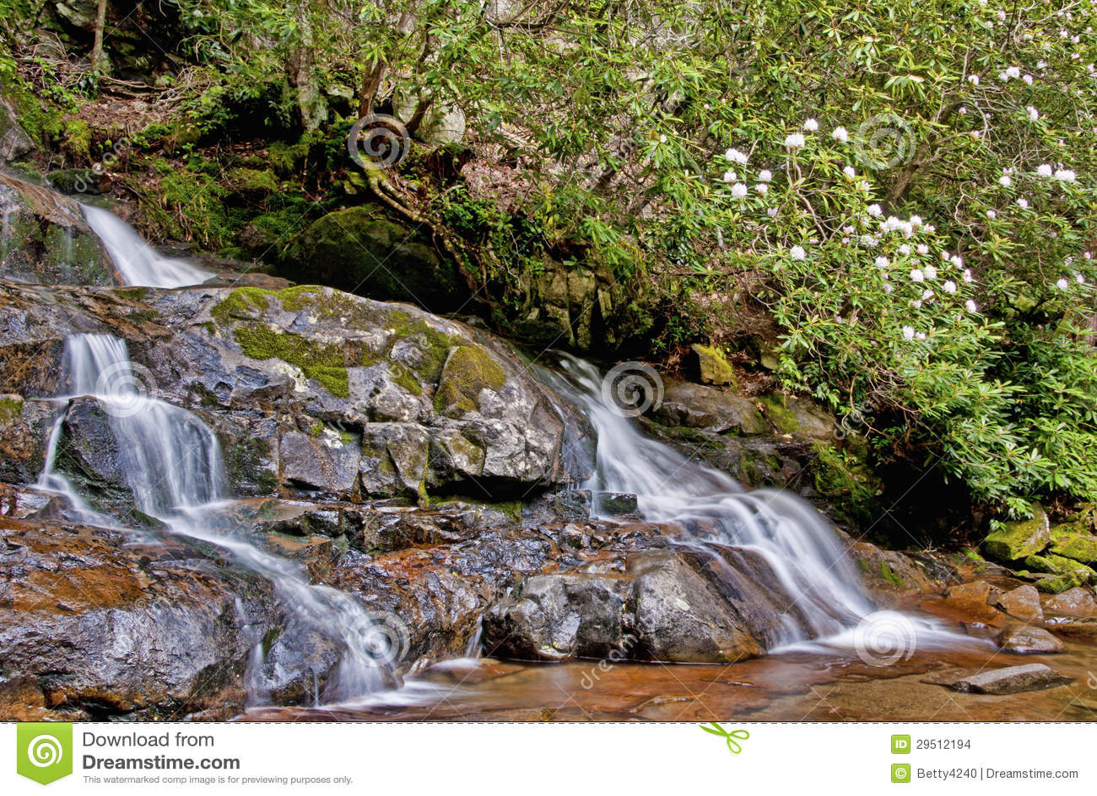 Een melkachtige waterval en een bloeiende rododendron.