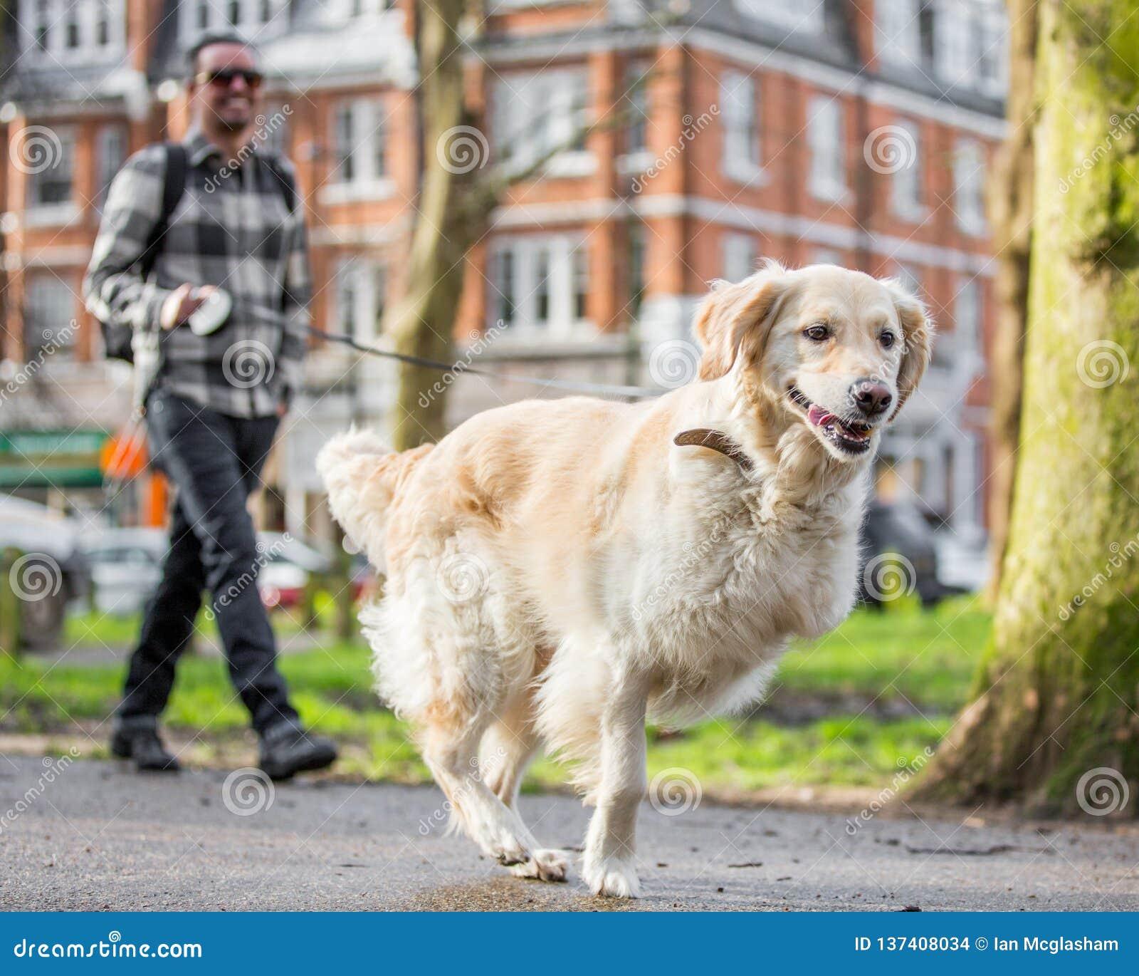 Een mens die een legged hond drie in het park lopen bij een hond toont