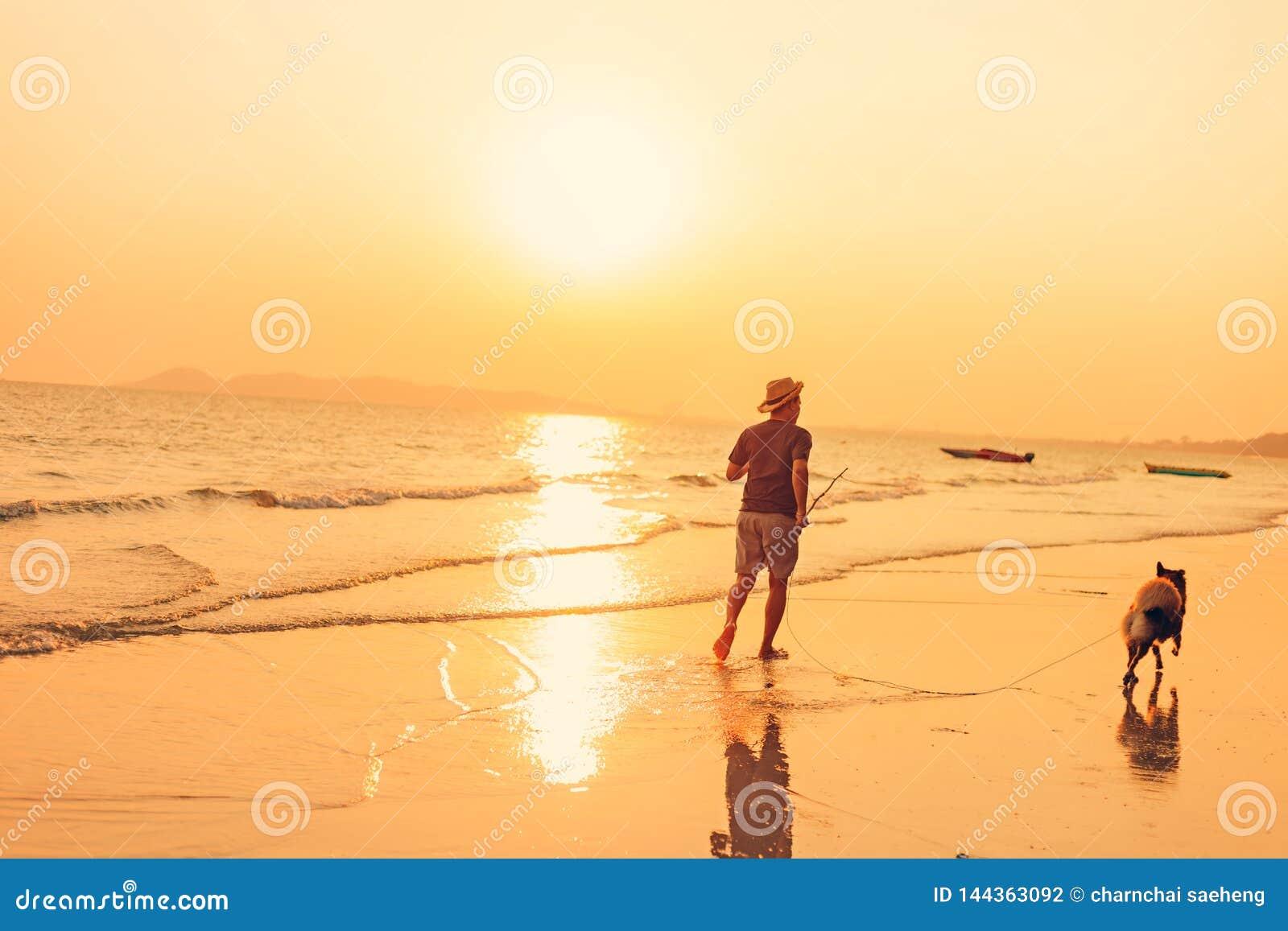 Een mens en een hond die op het strand en de zonsondergang, zonsopgang lopen
