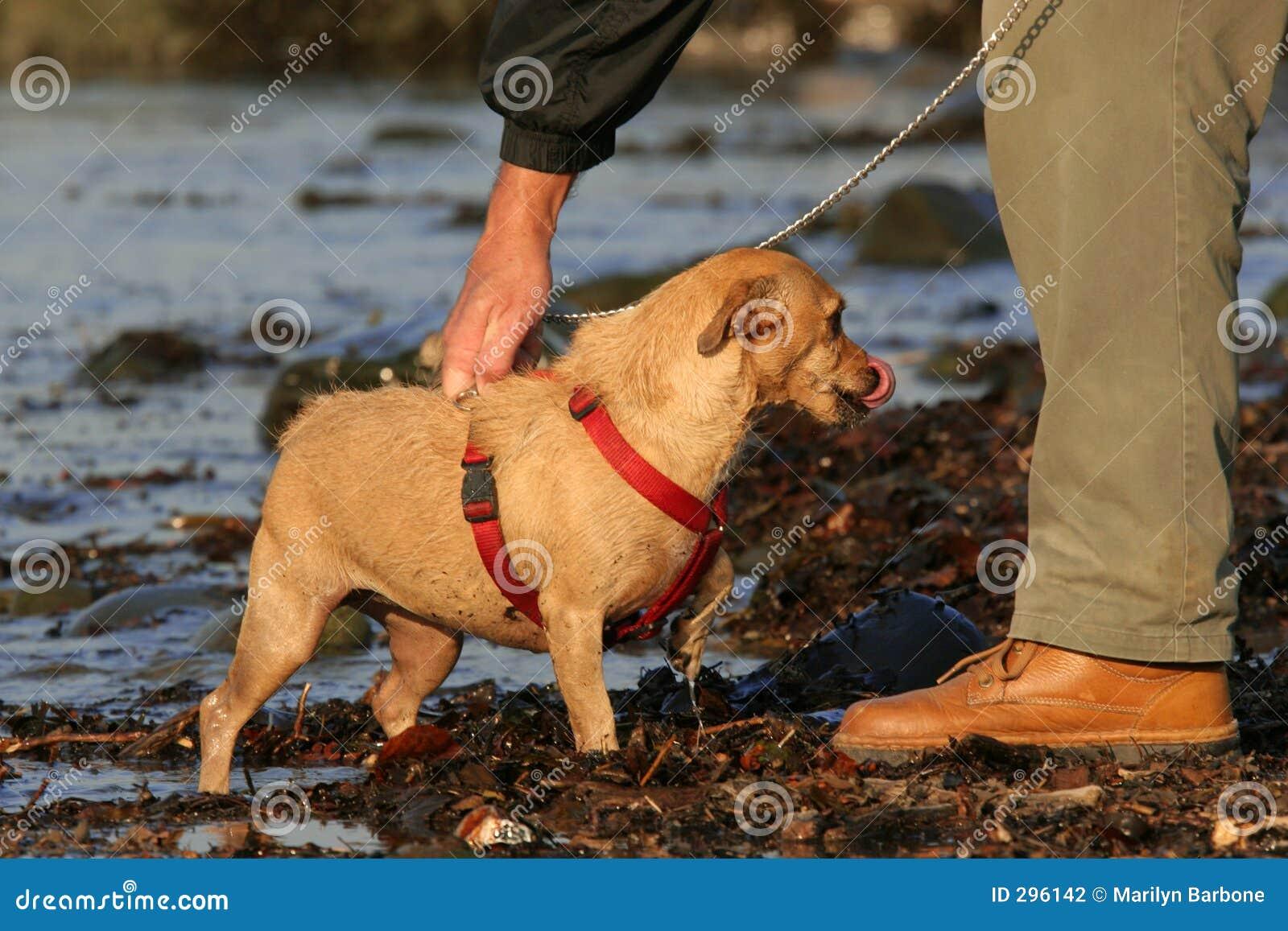 Een mens en Zijn hond