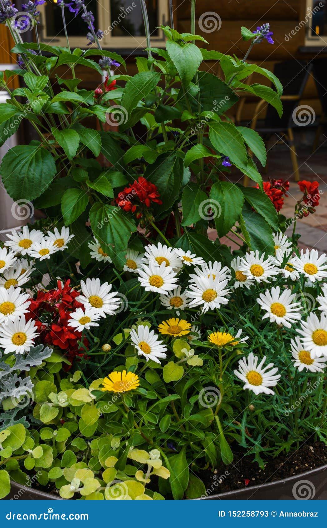 Een mooi boeket van diverse verse die bloemen in een bloempot worden geplant