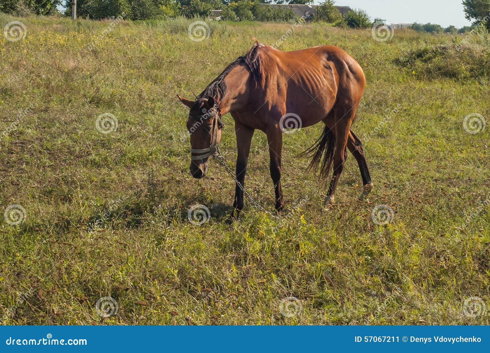 Een mooi bruin paard