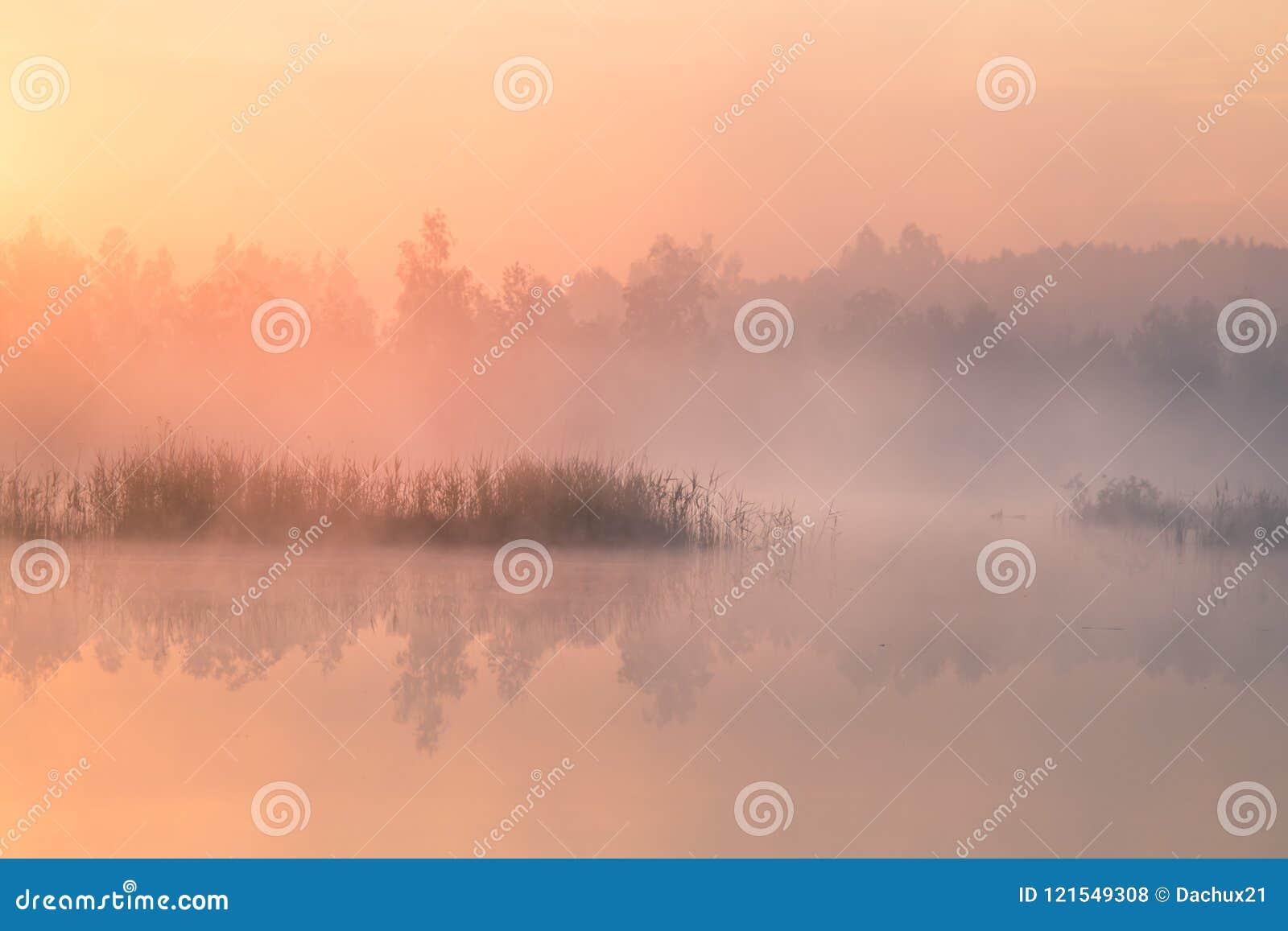 Een mooi, kleurrijk landschap van een nevelig moeras tijdens de zonsopgang Het atmosferische, rustige landschap van het moeraslan