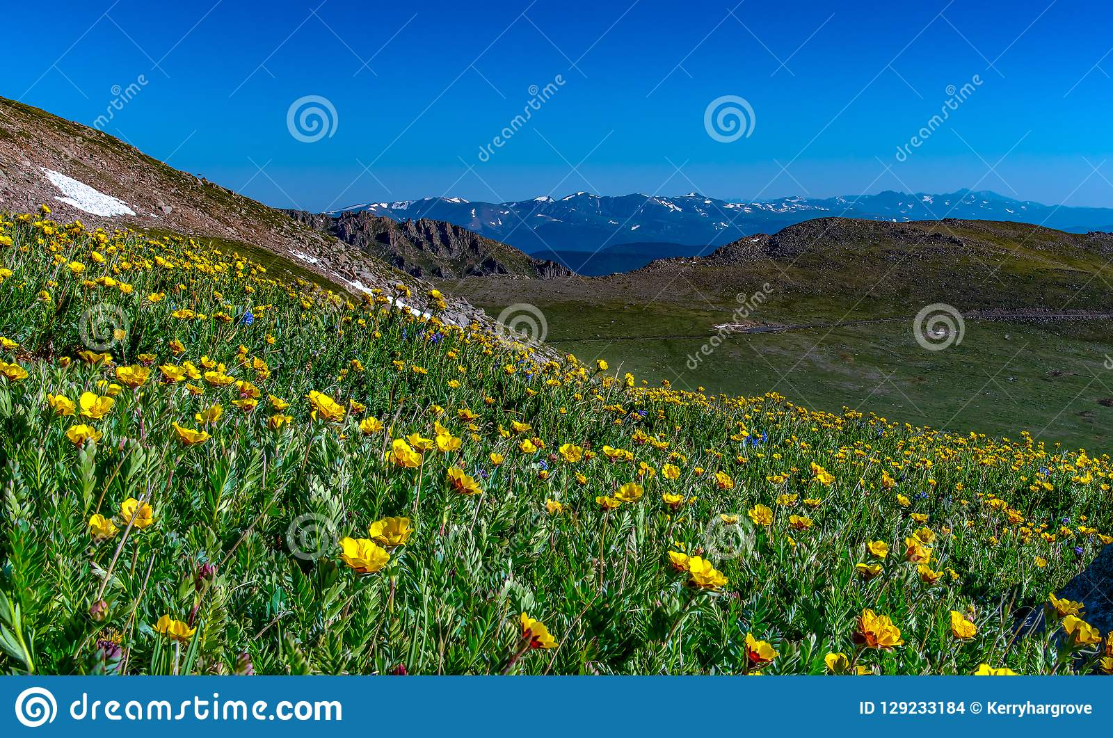 Een Mooie Alpiene Bergweide in de Zomer