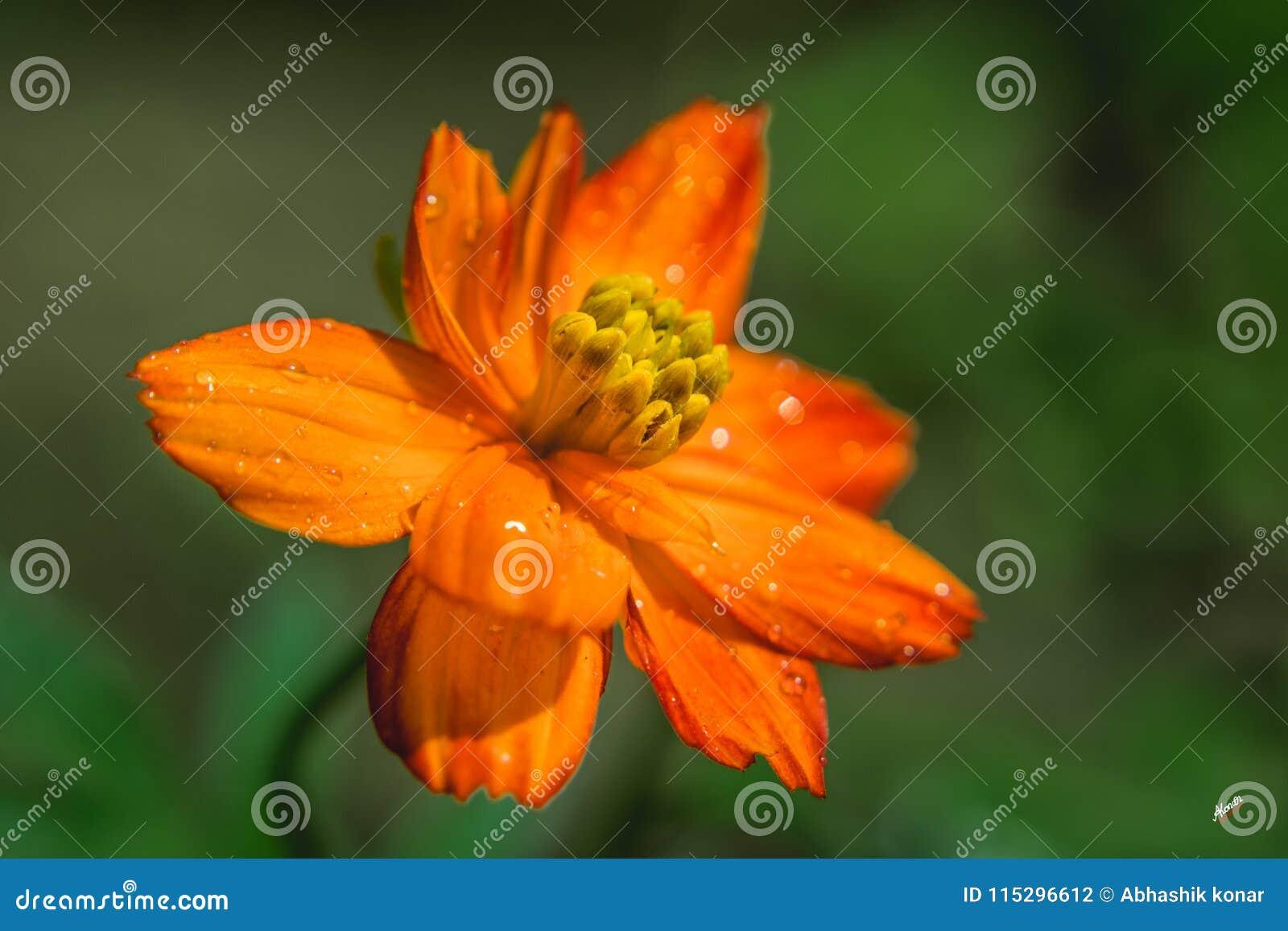 Een mooie bloem