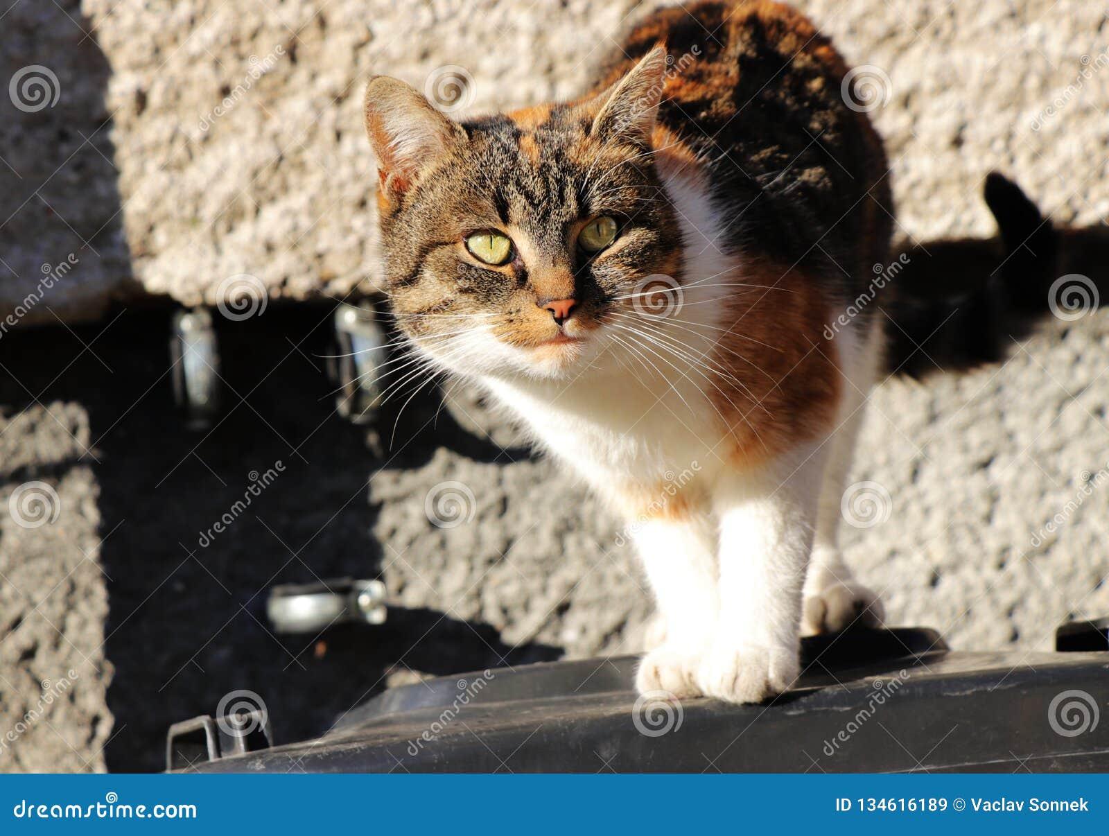 Een mooie multi gekleurde kat die zich op plastic bak bevinden en treft neer voor sprong voorbereidingen Zeer aardige groene ogen