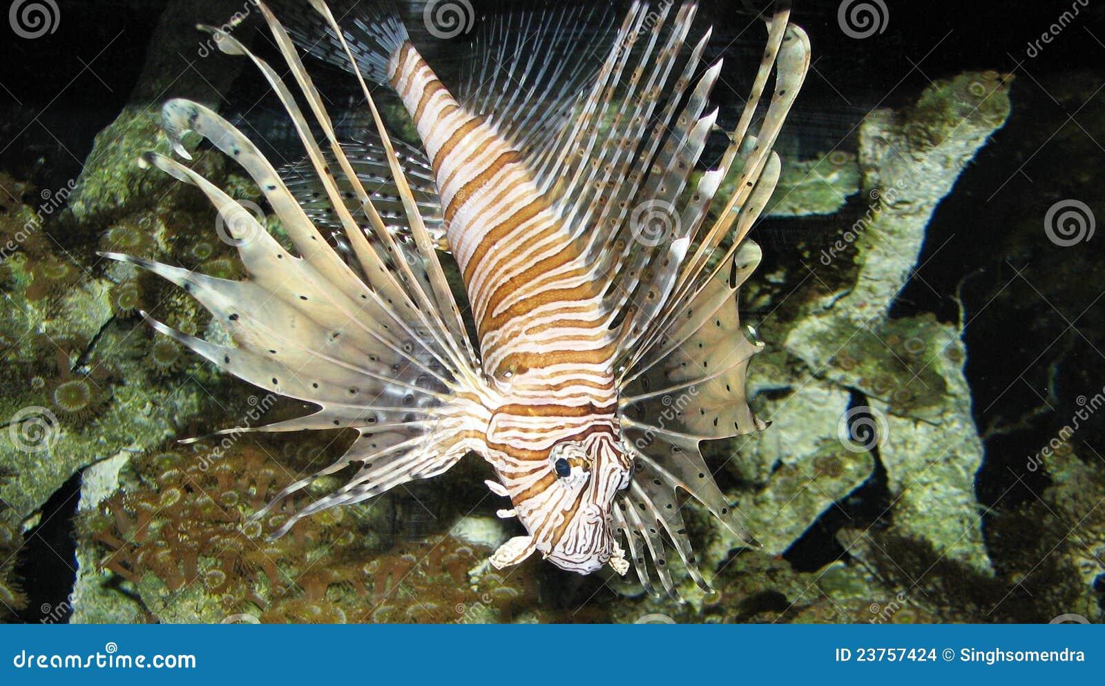 Een Mooie Vis Binnen Een Aquarium Stock Afbeeldingen   Afbeelding  23757424