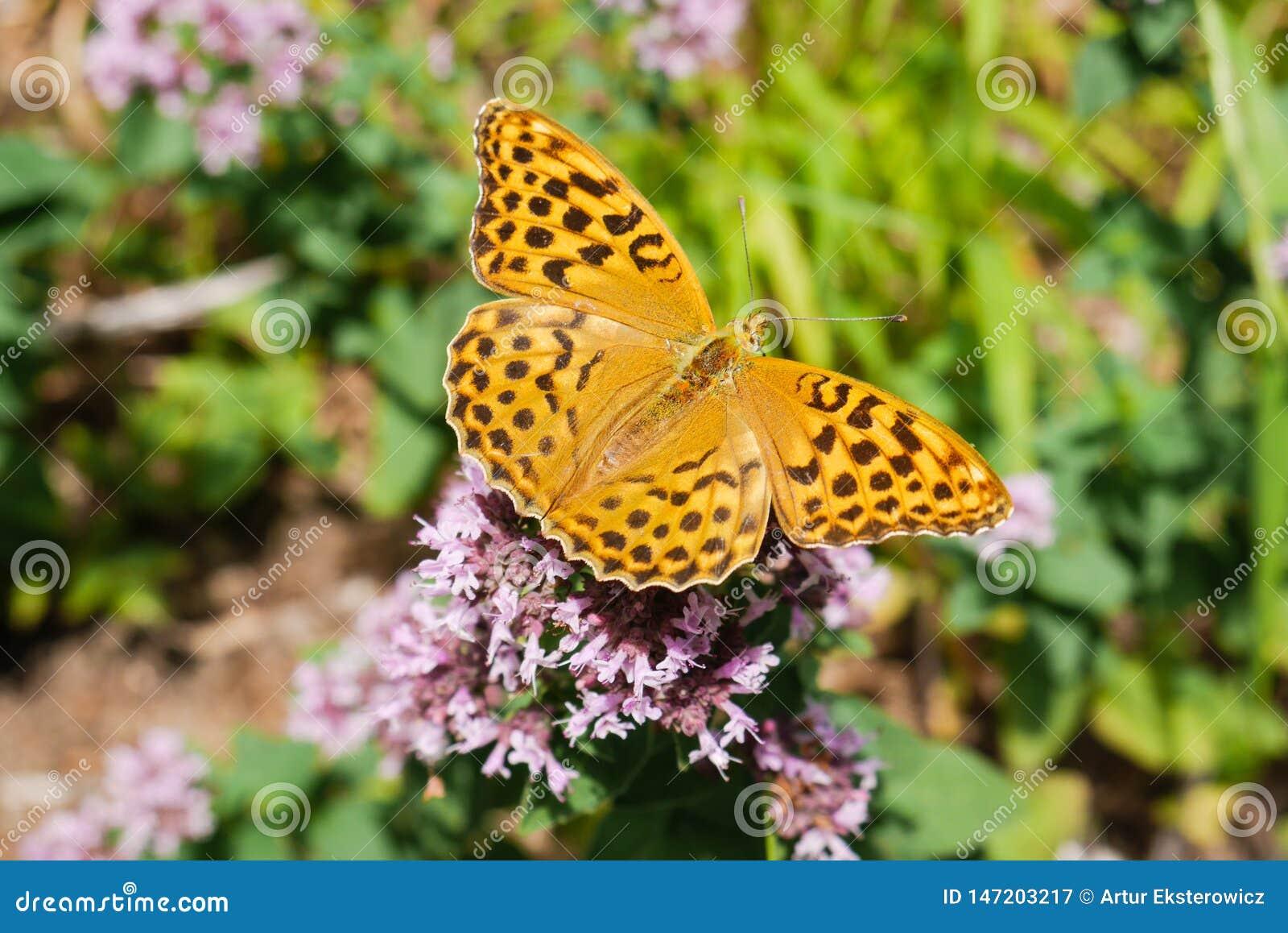 Een mooie vlinder op bloemen