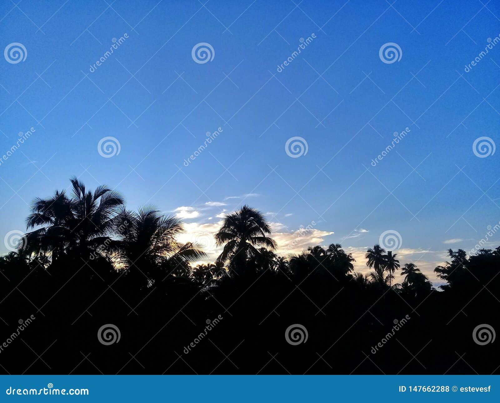 Een mooie zonsopgang achter de palmen